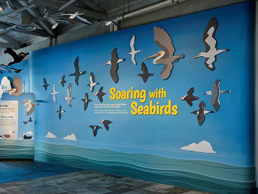 - Aquarium Seabirds Exhibit. Click for more details.