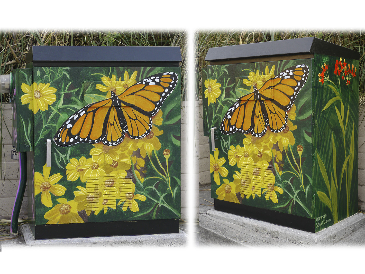Monarch butterflies pause in a special location in Santa Cruz on their migratory flight to Mexico.