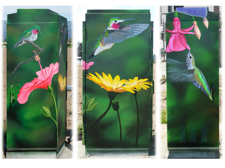 Hummingbirds, Watsonville CA