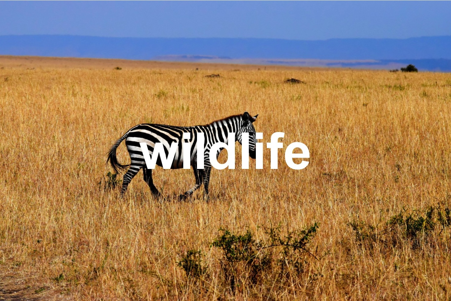 Wildlife with Text.jpg