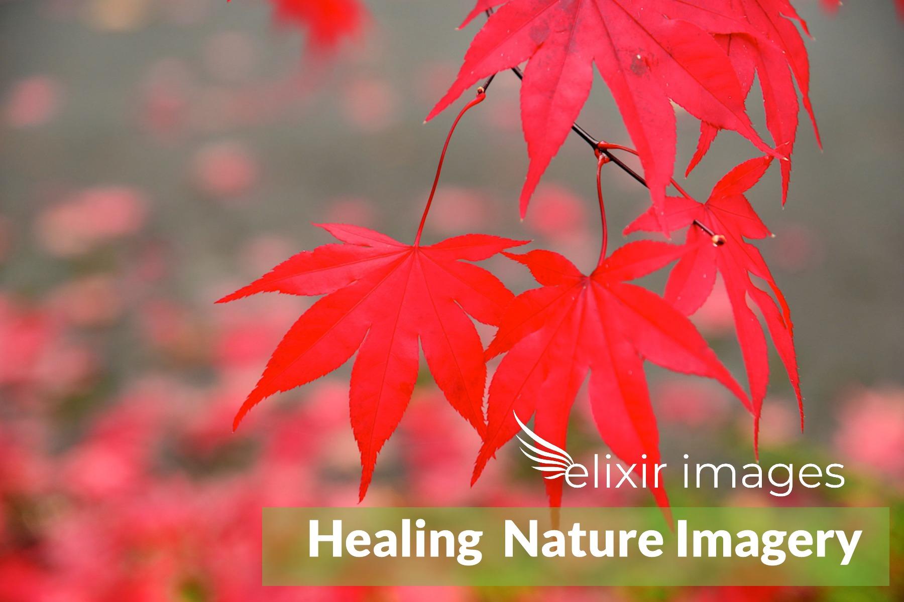 EI Healing Imagery 3.jpg