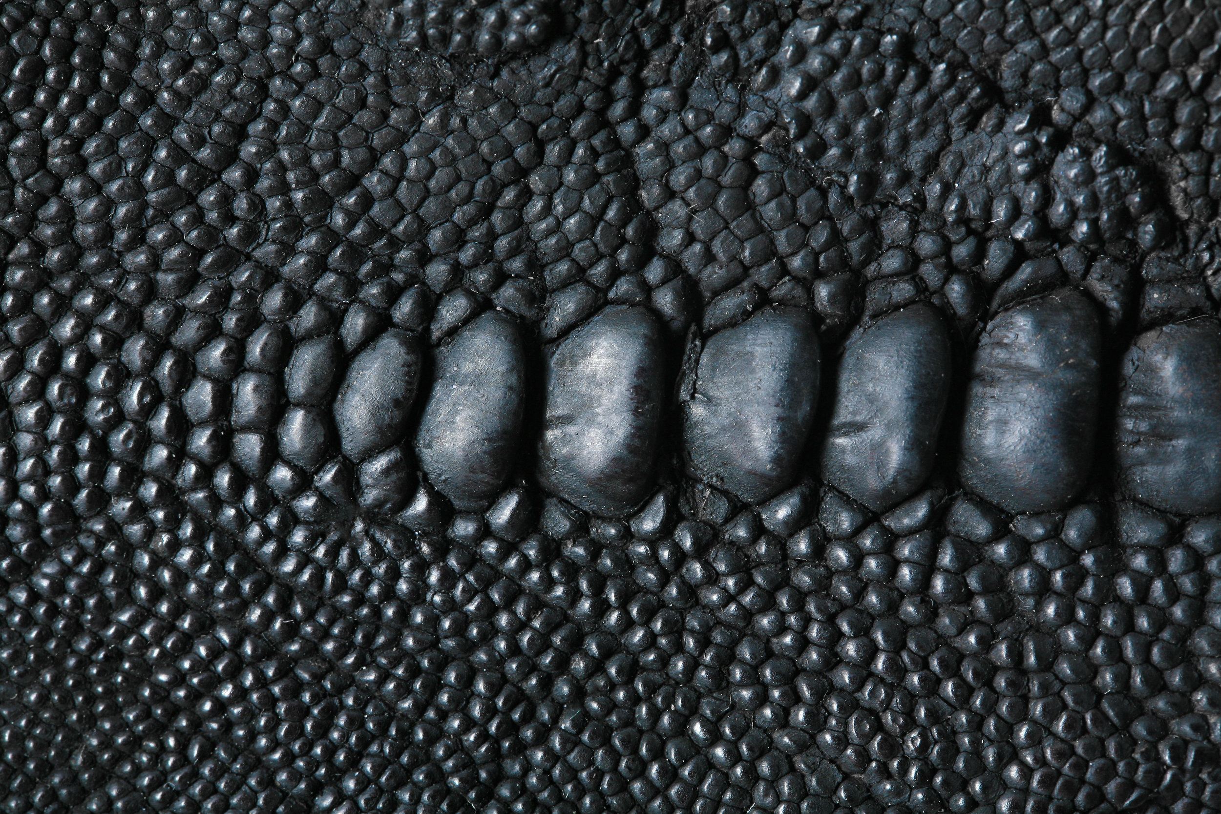 Animal skin ban: is it worth it? - Luxury fashion brands save species. Fact. But the recent announcement by Chanel that it will no longer use reptile skins, will not save species. In our opinion, as leaders within the world's largest and oldest conservation organisation, the decision may be well-meaning, but it is wrong. It will adversely affect the conservation of wild animals and the livelihoods of the people who live with and depend on that wildlife.Full article here
