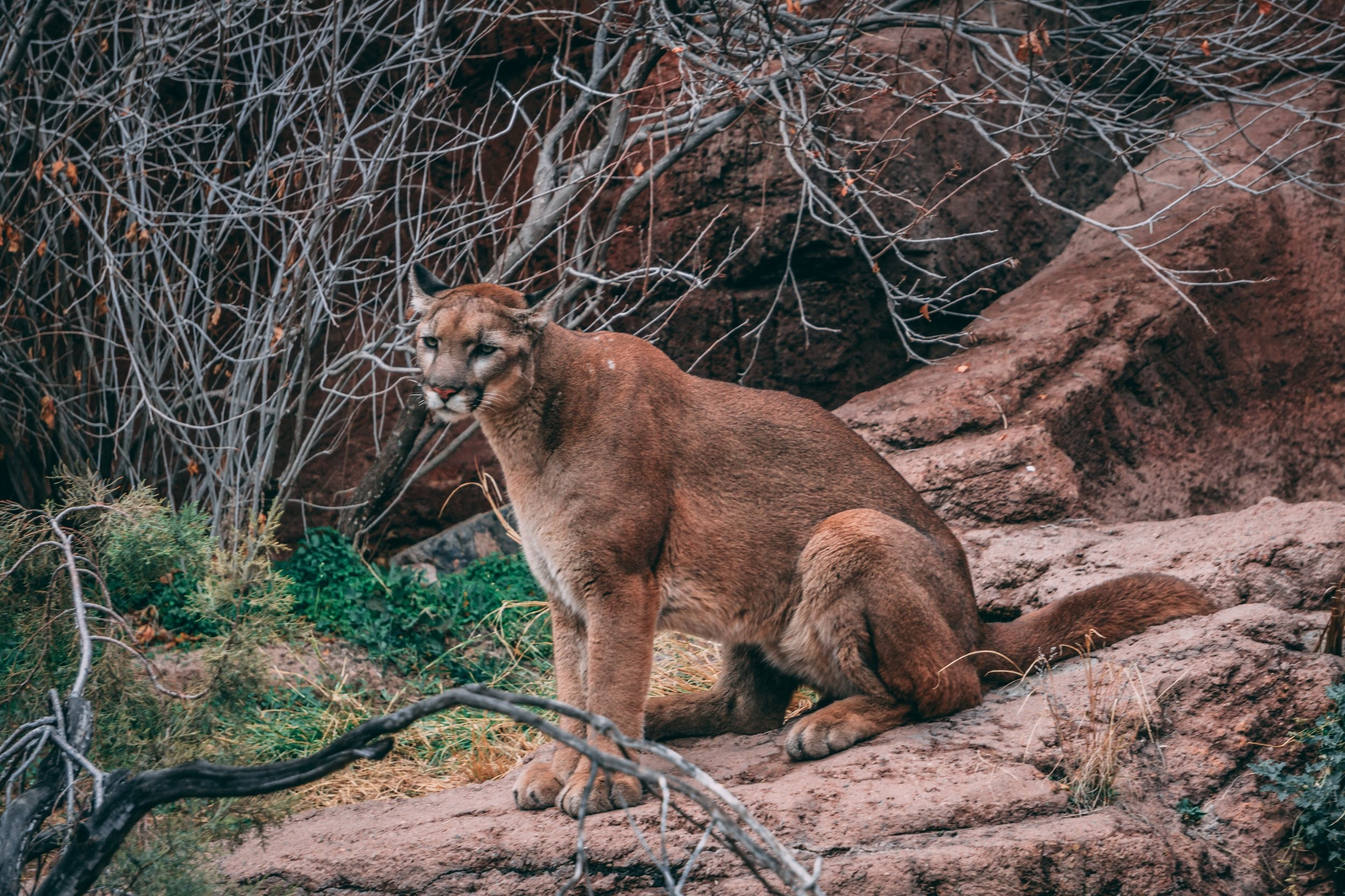 Wildlife Conservation Center - The Conservation Center is neither a zoo nor an animal park; but a sanctuary dedicated to the rescue of wild animals found abandoned, injured or orphaned.