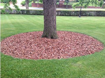 A correctly mulched tree