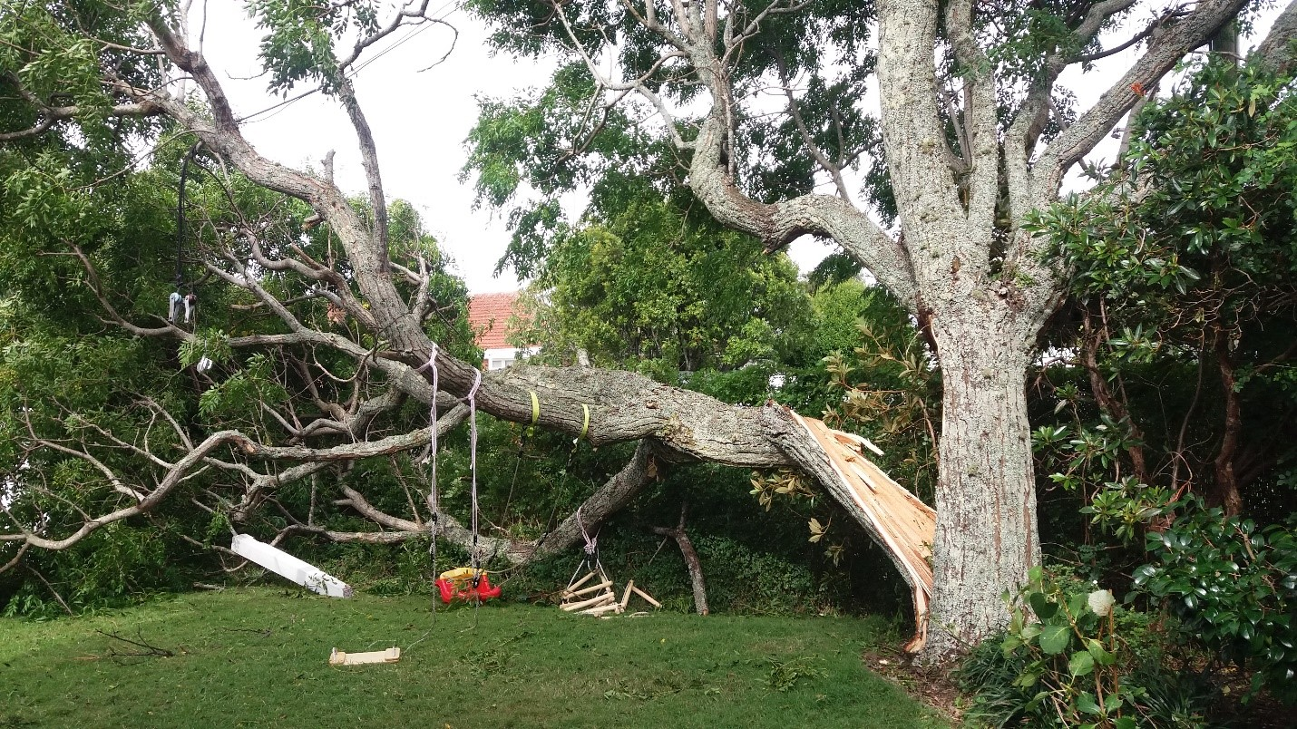 This tree failed during the 2018 Auckland storm taking down a power line to the house and blocking the footpath and driveway