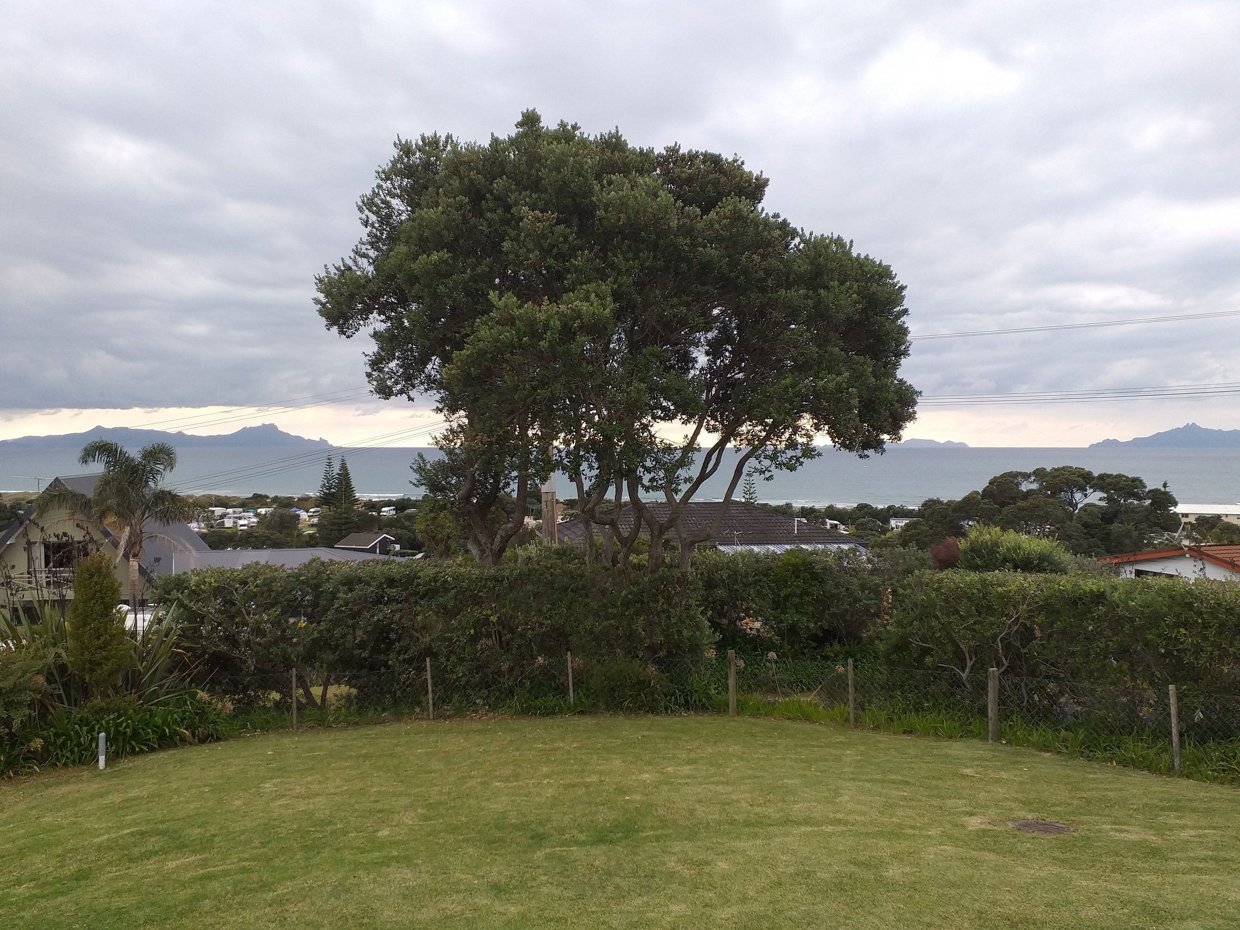View of horizon obscured by Pohutakawa tree