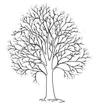 Illustration courtesy of European Arboricultural Council