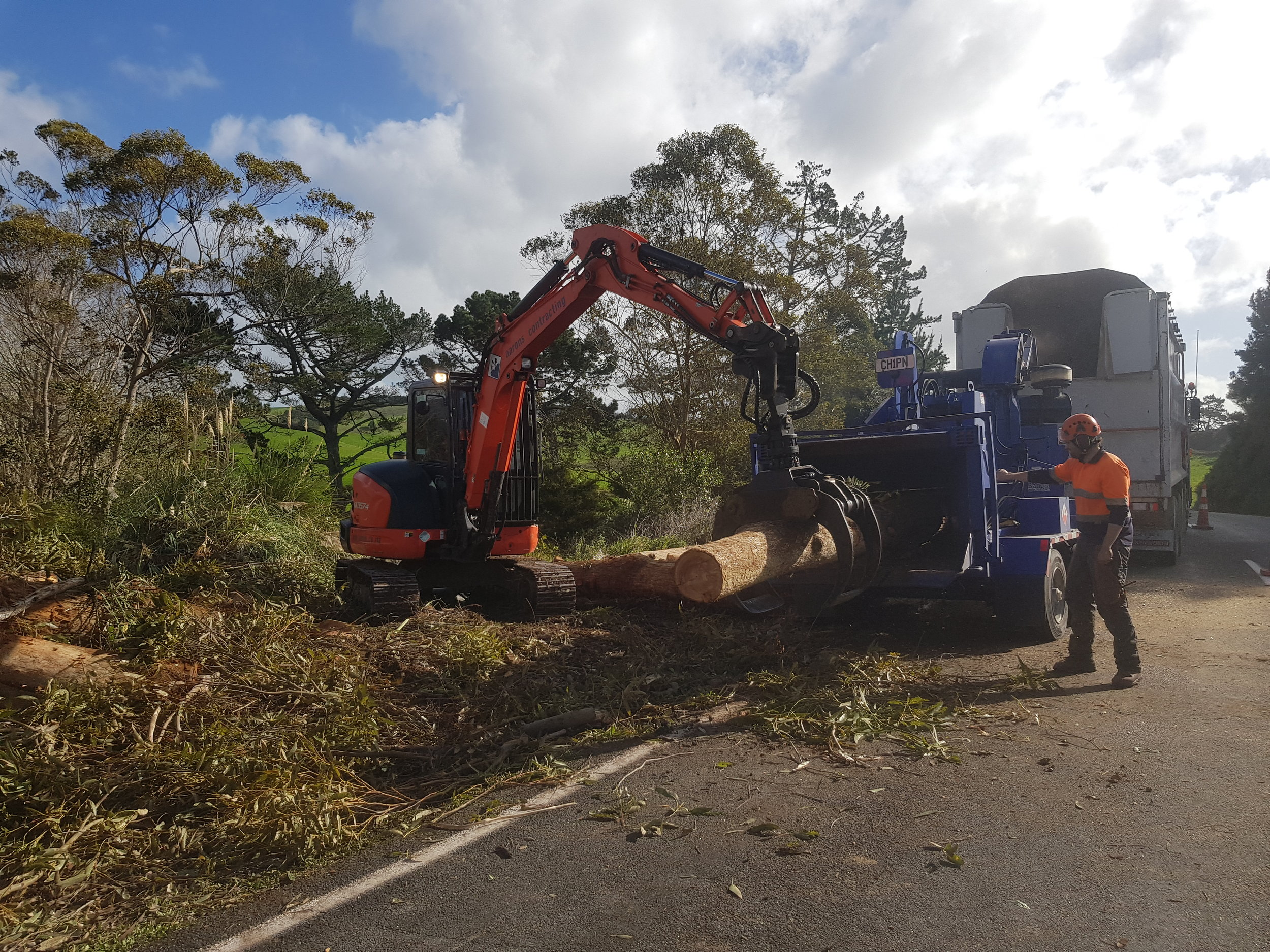 Large tree removal Waipu 2.jpg
