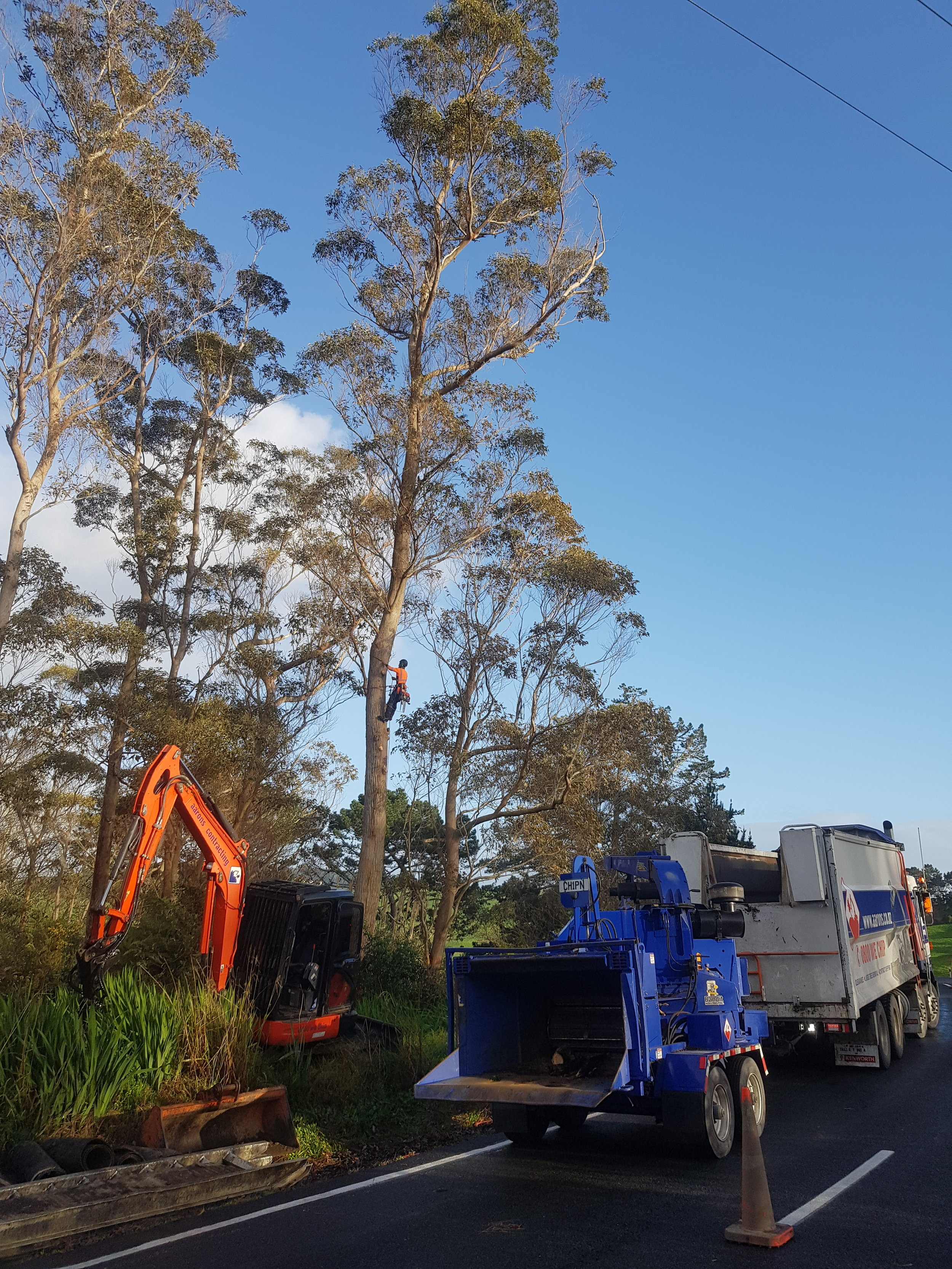 Large tree removal Waipu 3.jpg