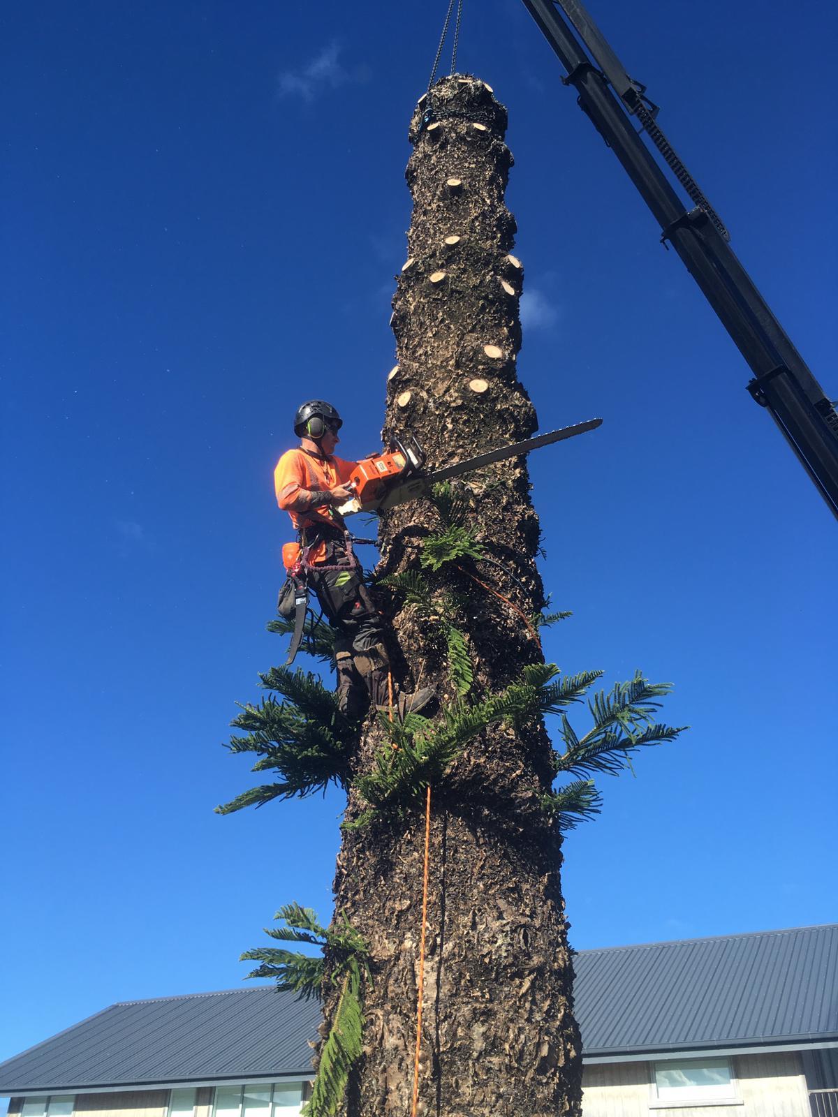 Tree crane removl Waipu.jpg