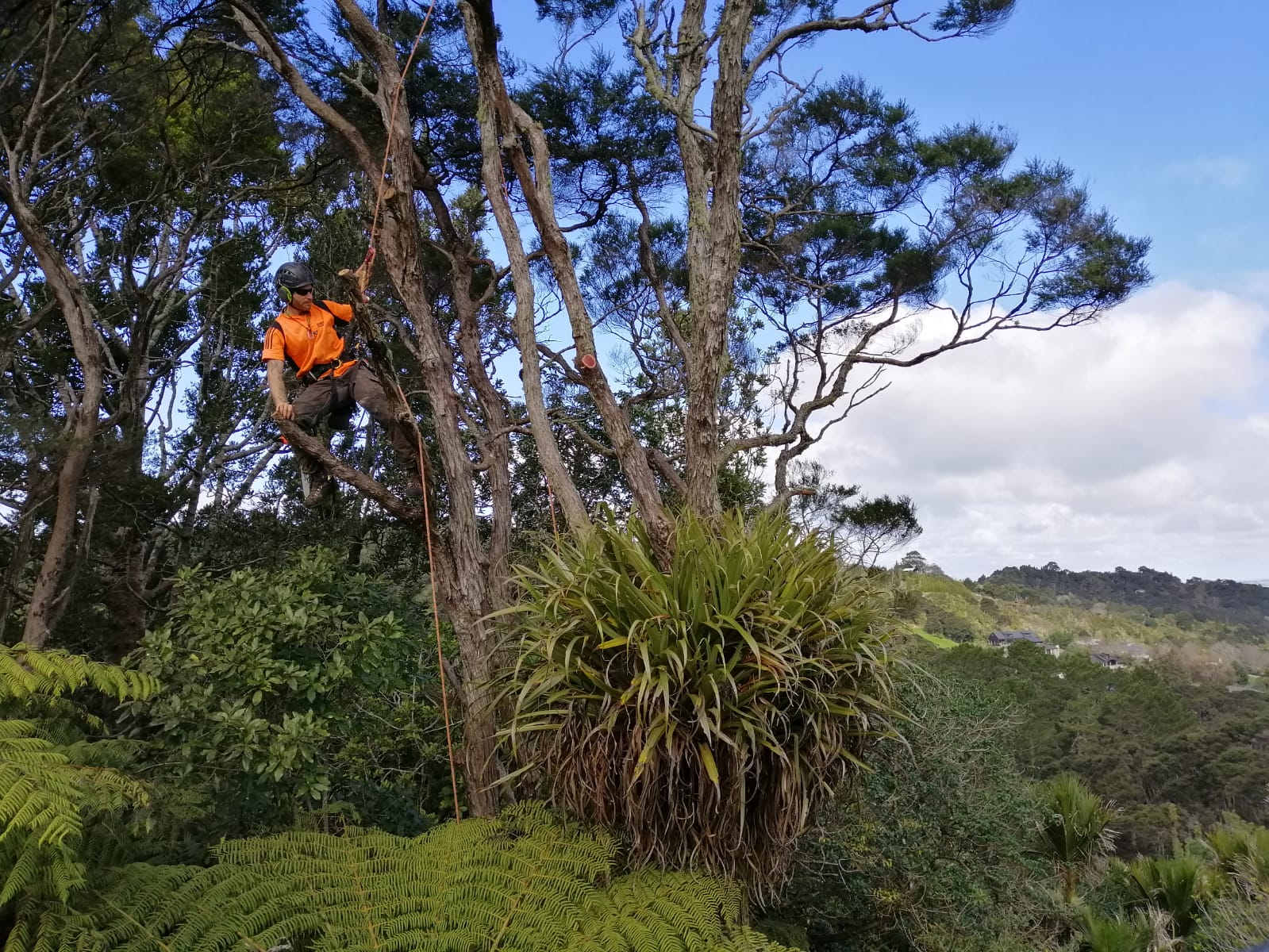 Tree pruning Ruakaka.jpg