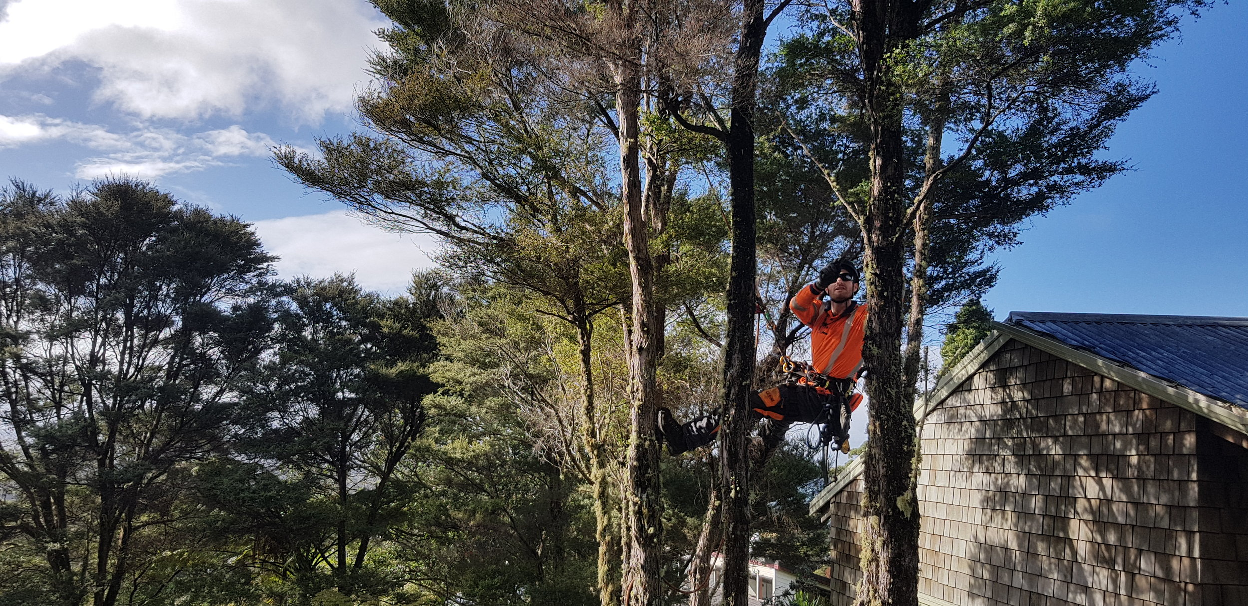 Tree pruning One Tree Point.jpg