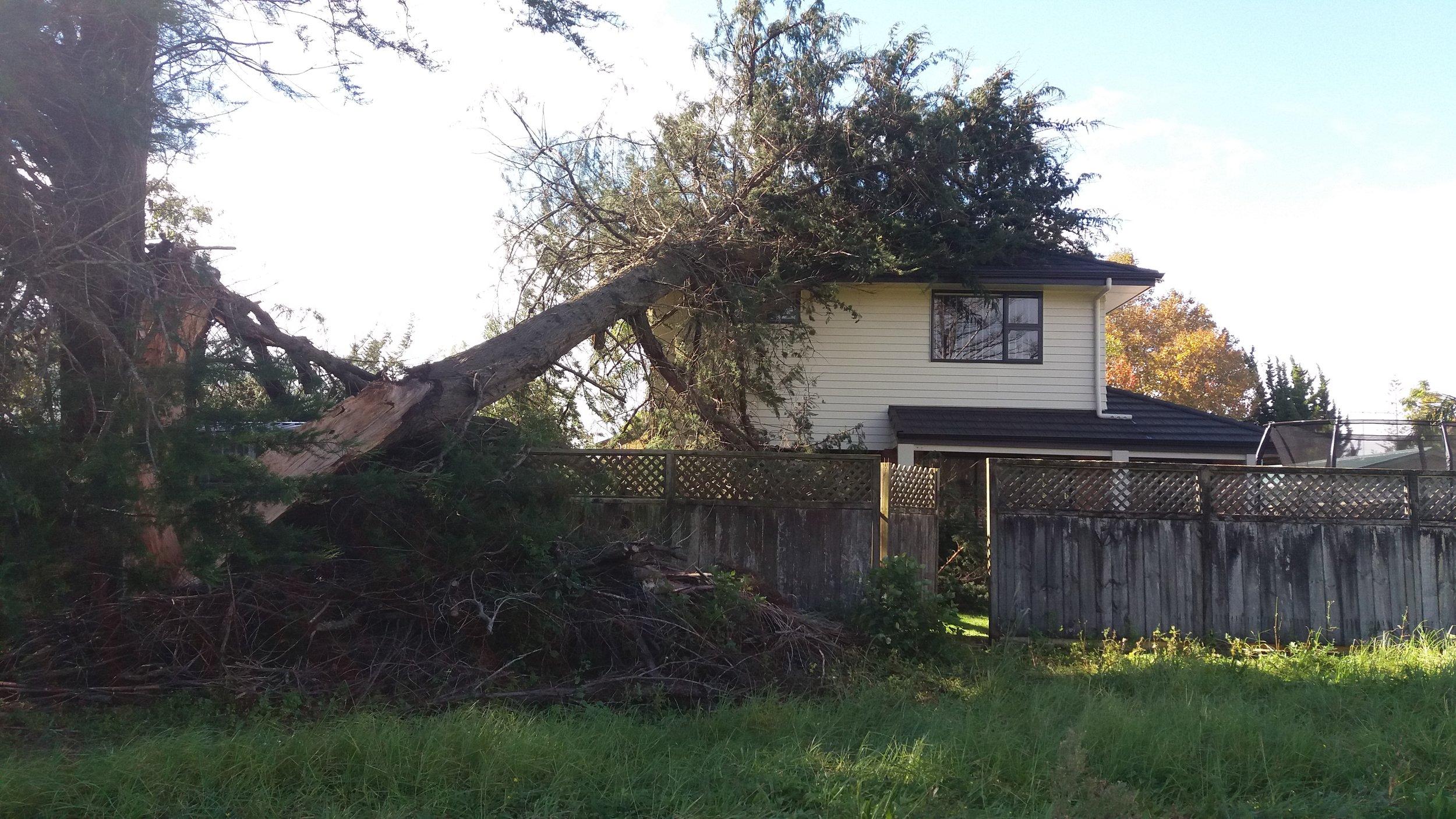 Emergency tree work Ruakaka.jpg