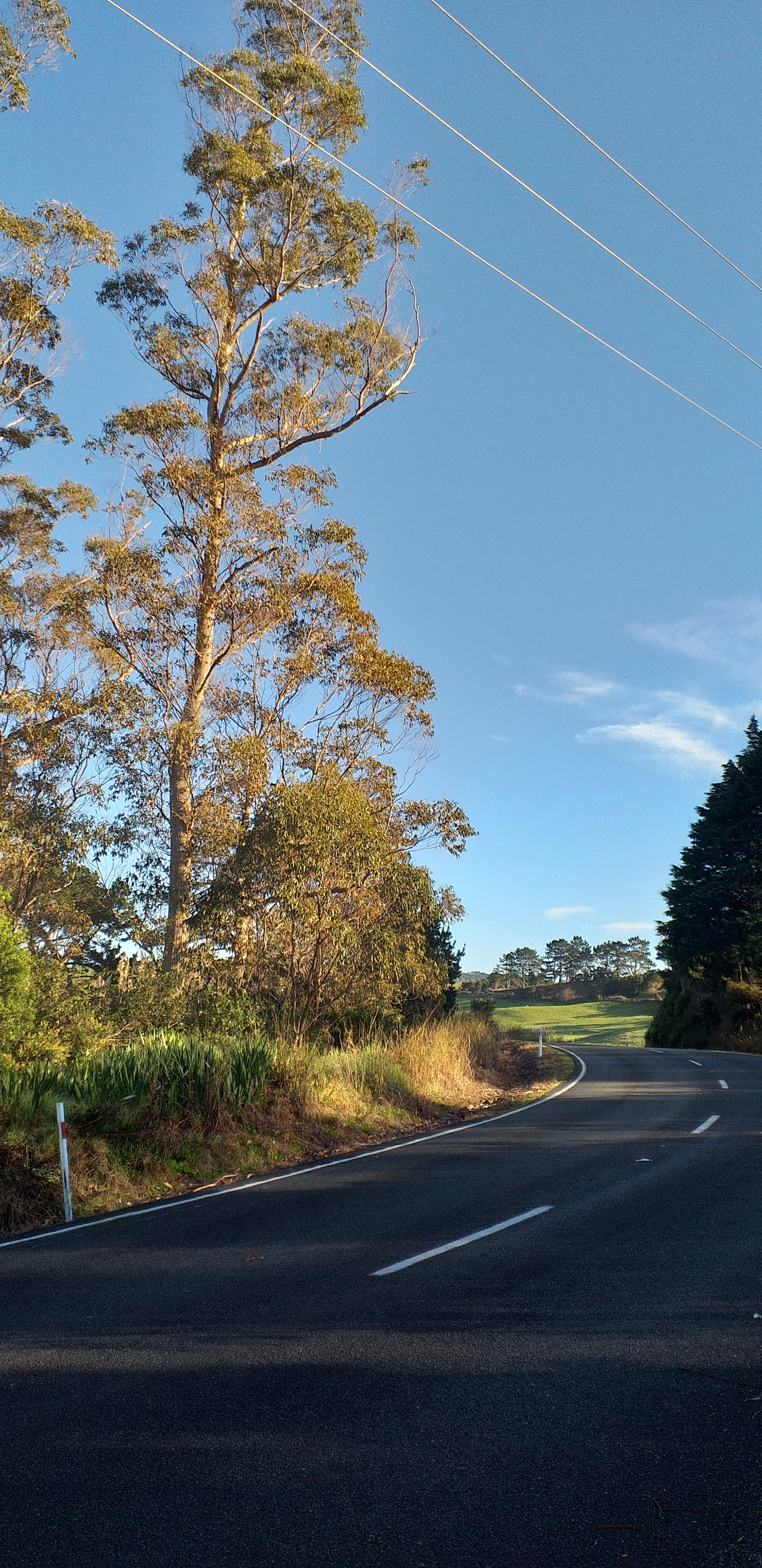 The picture shows the proximity of the trees to the road and the power lines on the other side