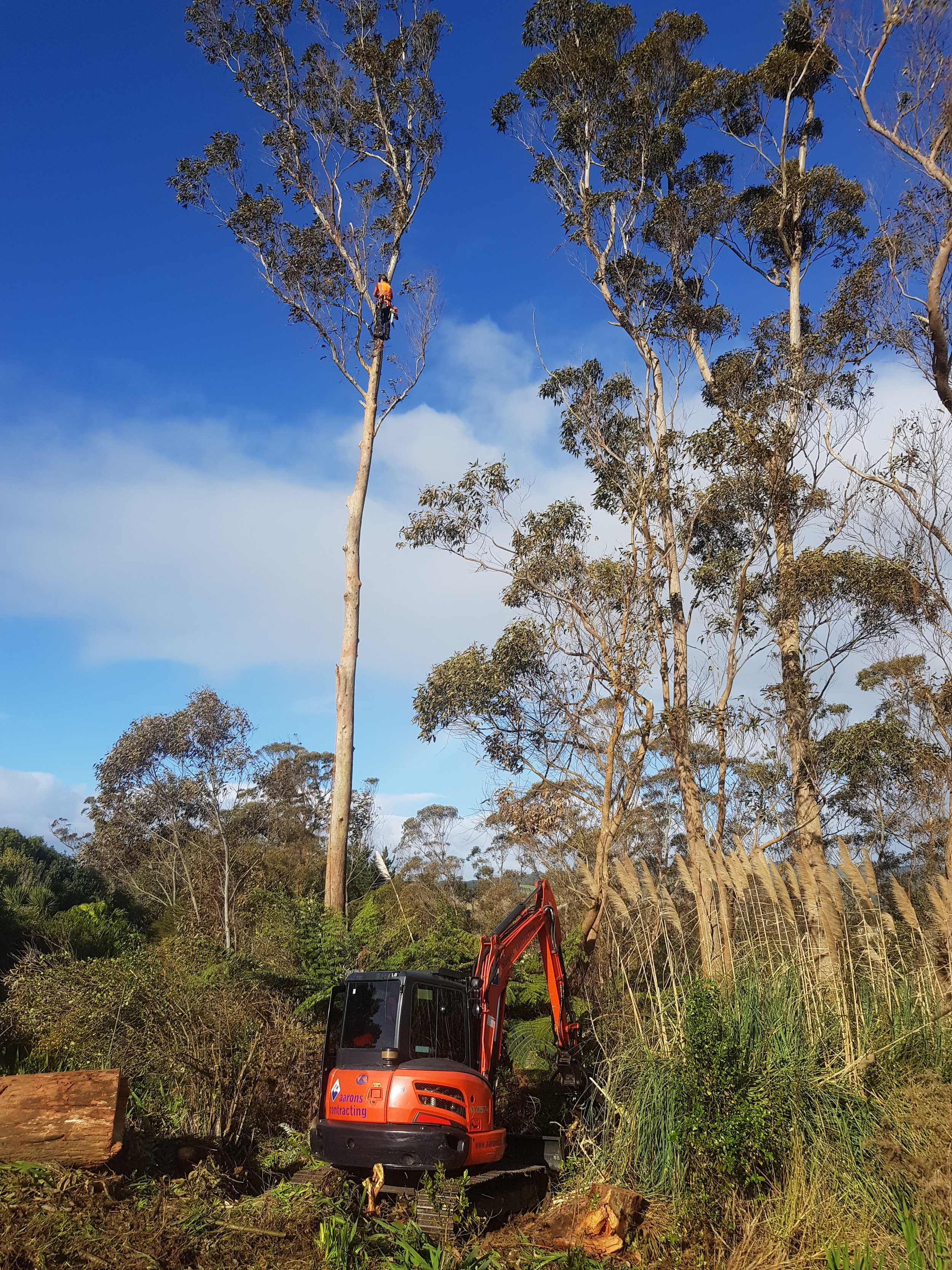 The trees were brought down in sections and then stacked using the digger