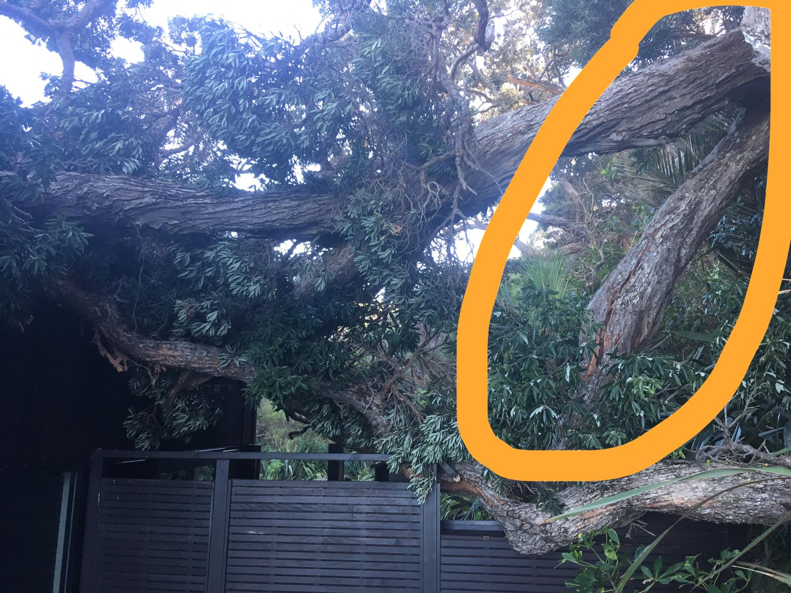 This picture shows the fallen tree with the limb we had identified that was bearing much of the weight