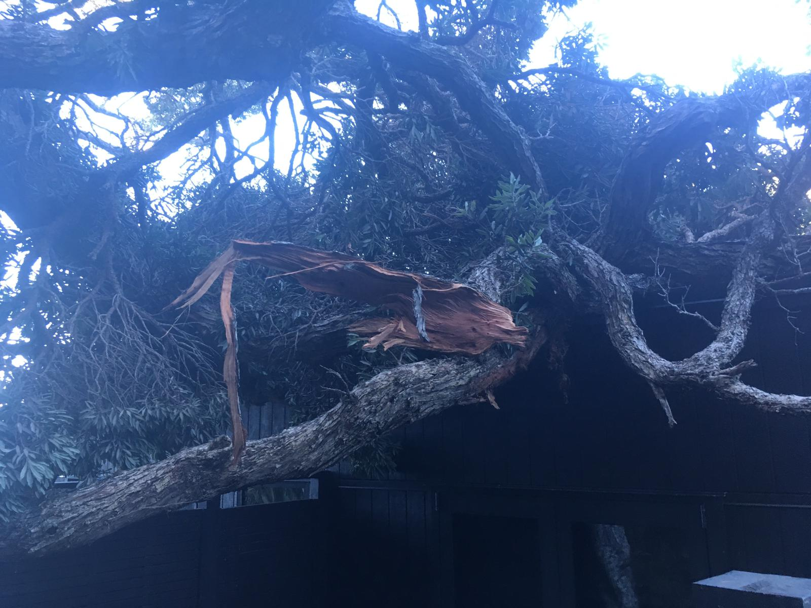 A mess of tangled and shattered limbs on the roof