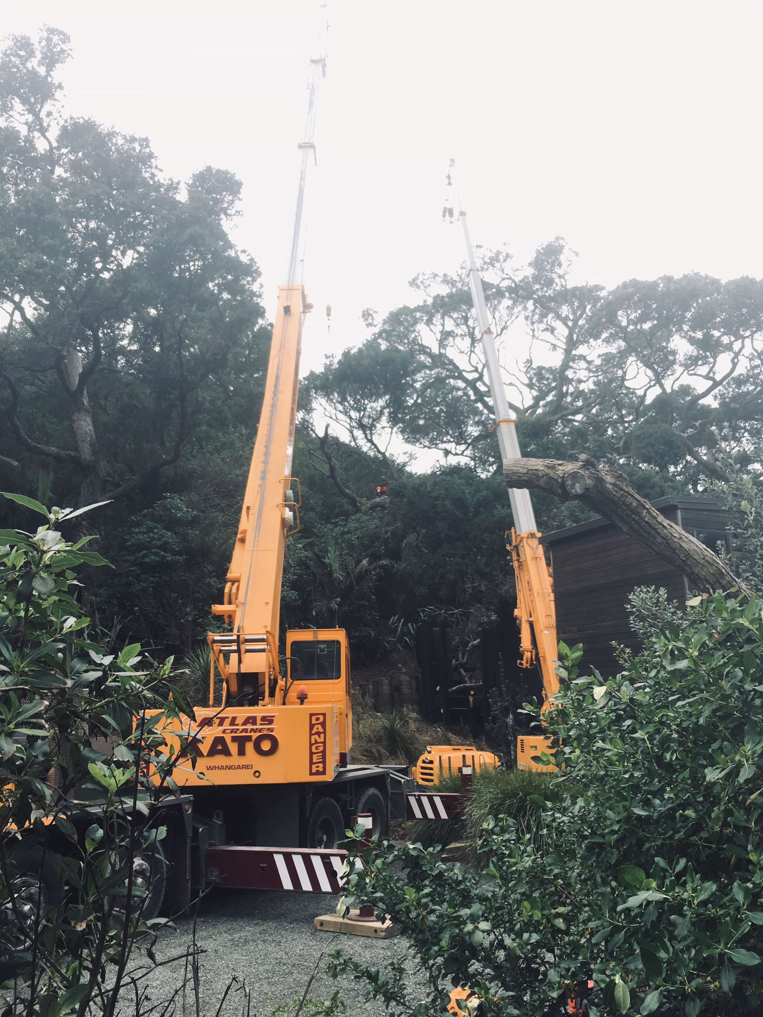 The crane on the right was the climbers anchor, the crane on the left lifted the sections of tree away