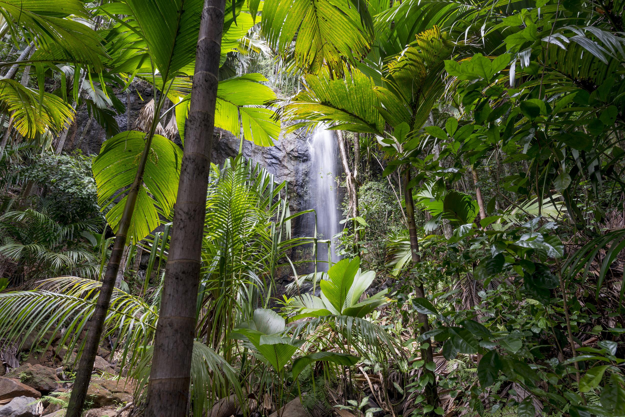 MAHE ISLAND - A Nature Reserve Paradise