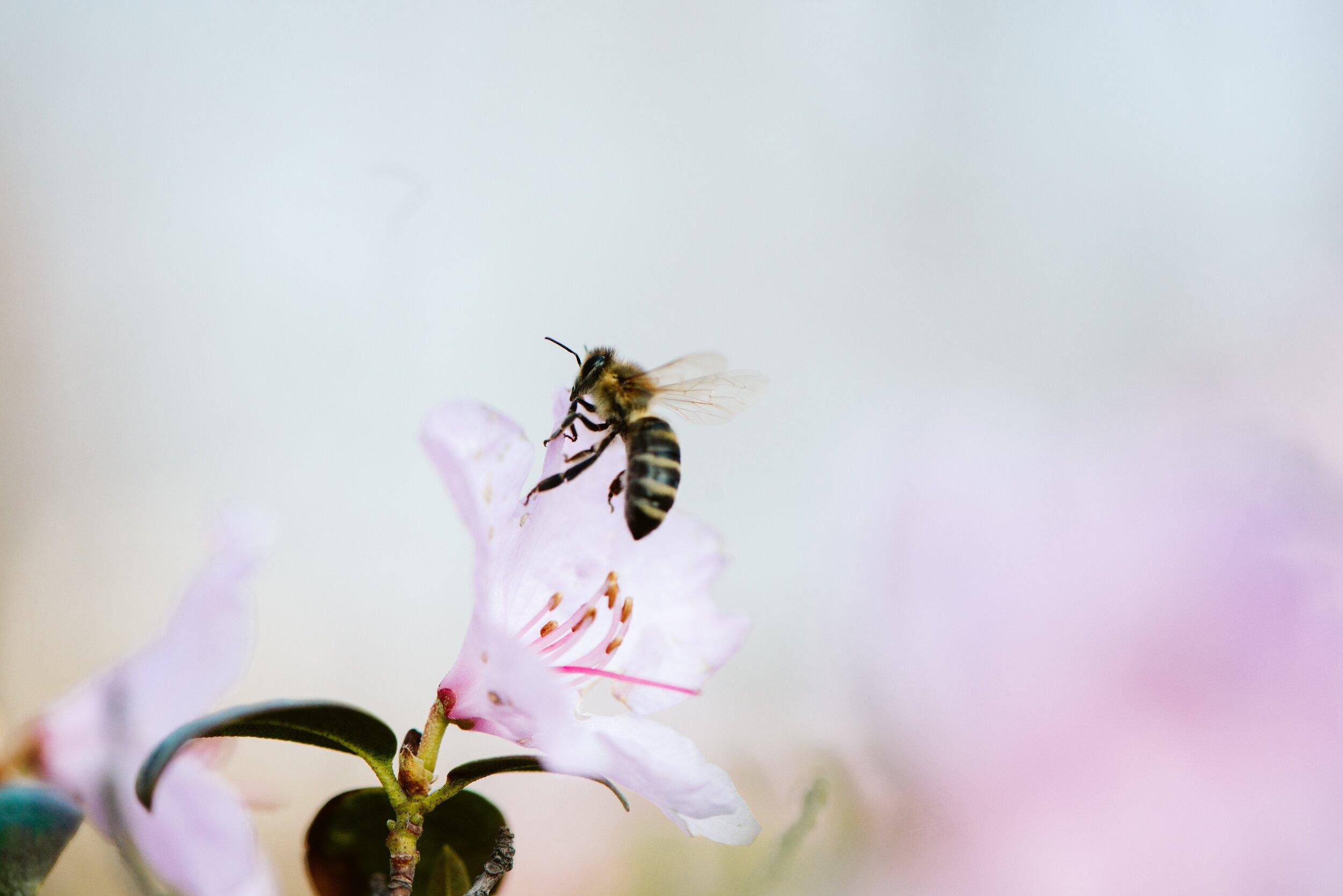 8 Ways to Make Your Garden Bee-Friendly