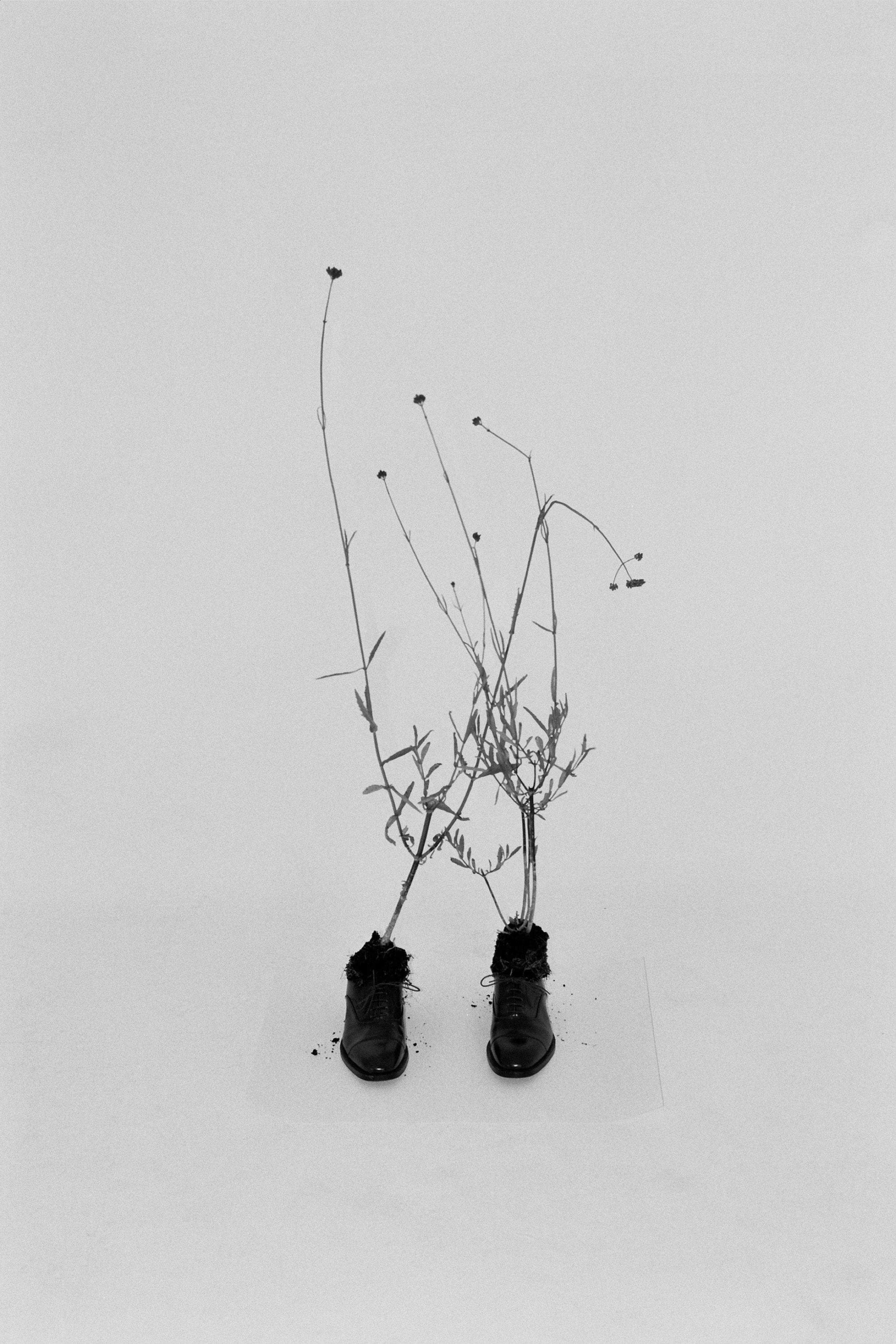 Rebecca Rose Harris, Rebecca Rose Harris Photography, A Portrait Of grief