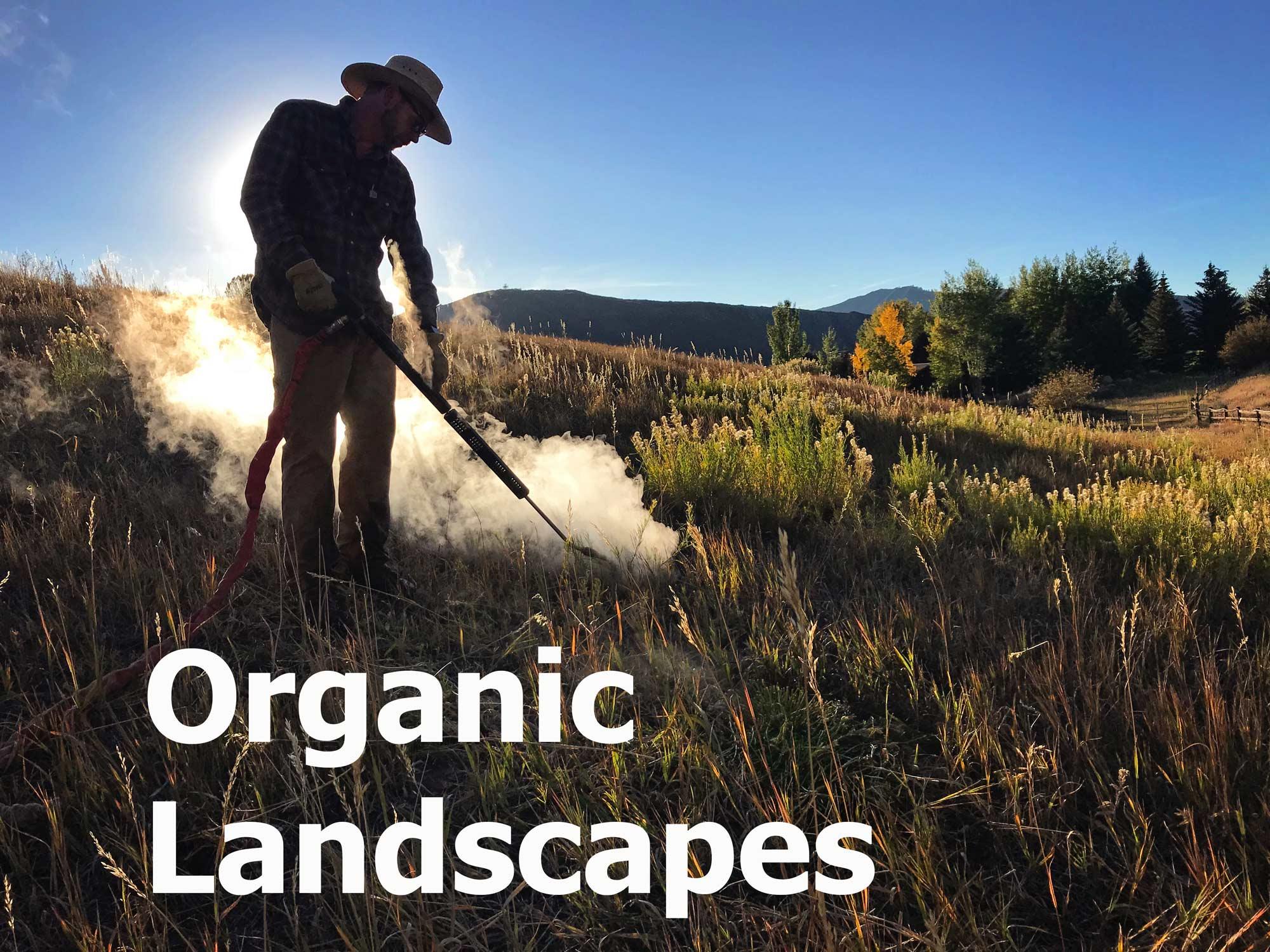 organic-horse-pastures-weedsteam-pasture-homepage.jpg