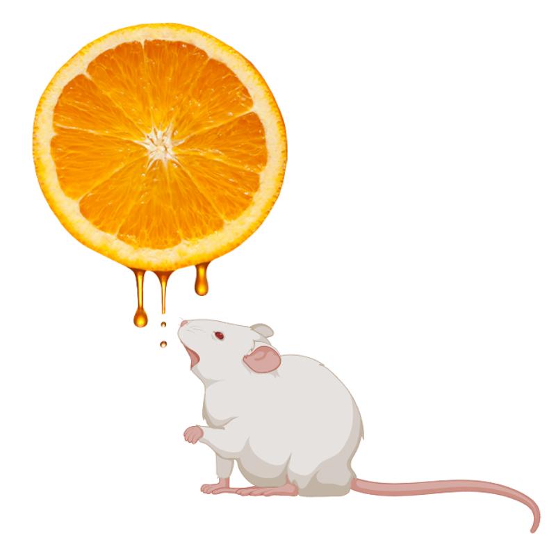 VitC_mouse.jpg