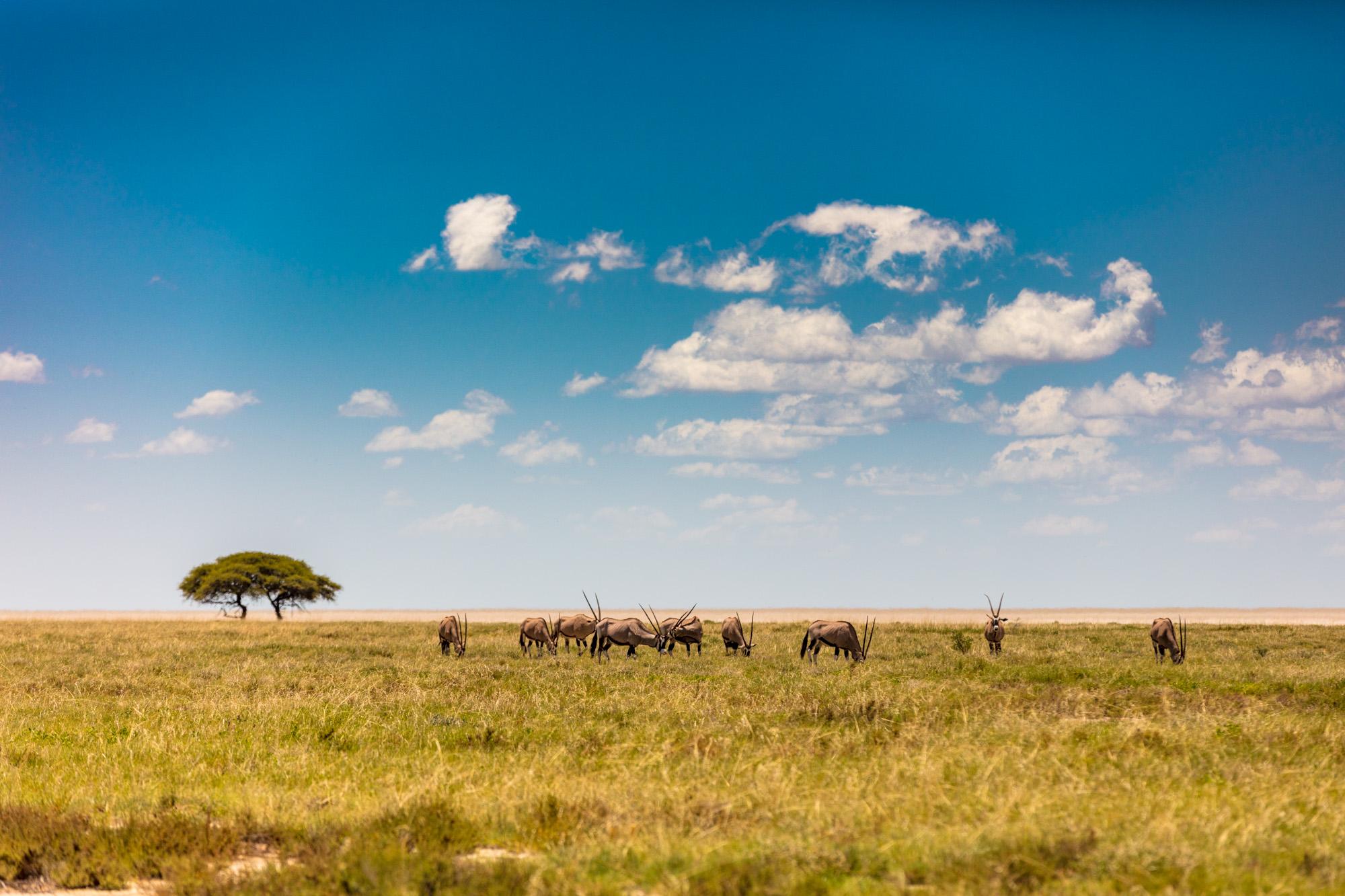 Oryx at Etosha Pan