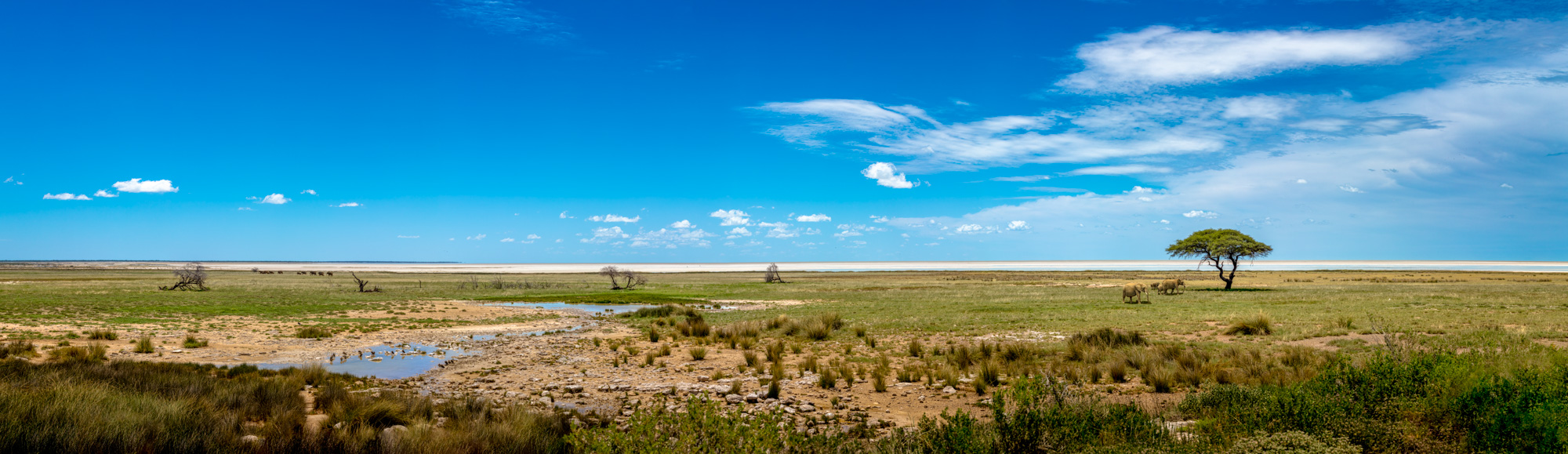 Etosha Pan Panoramic View