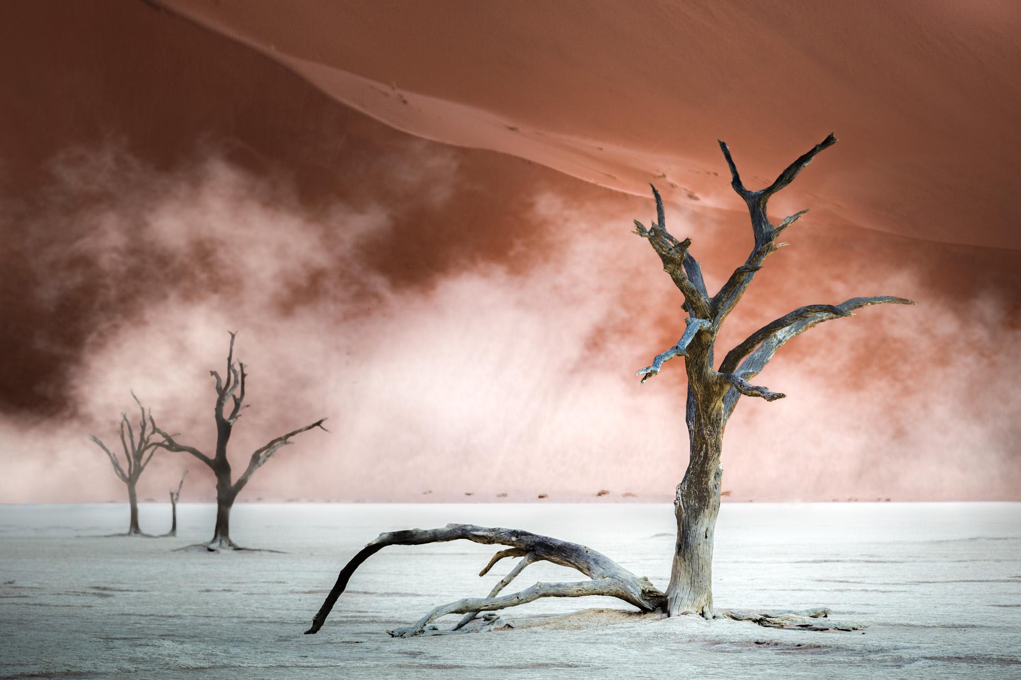 Dead Trees at Dead Vlei II Cropped