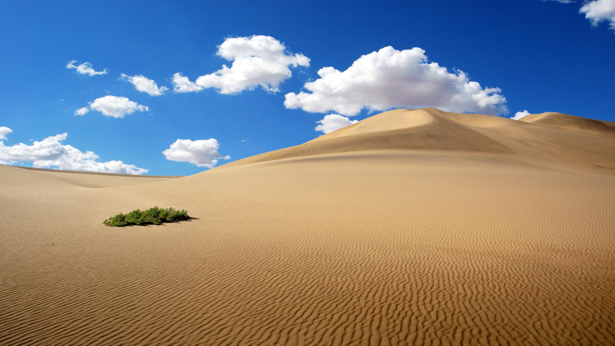 Life At Namibia Desert