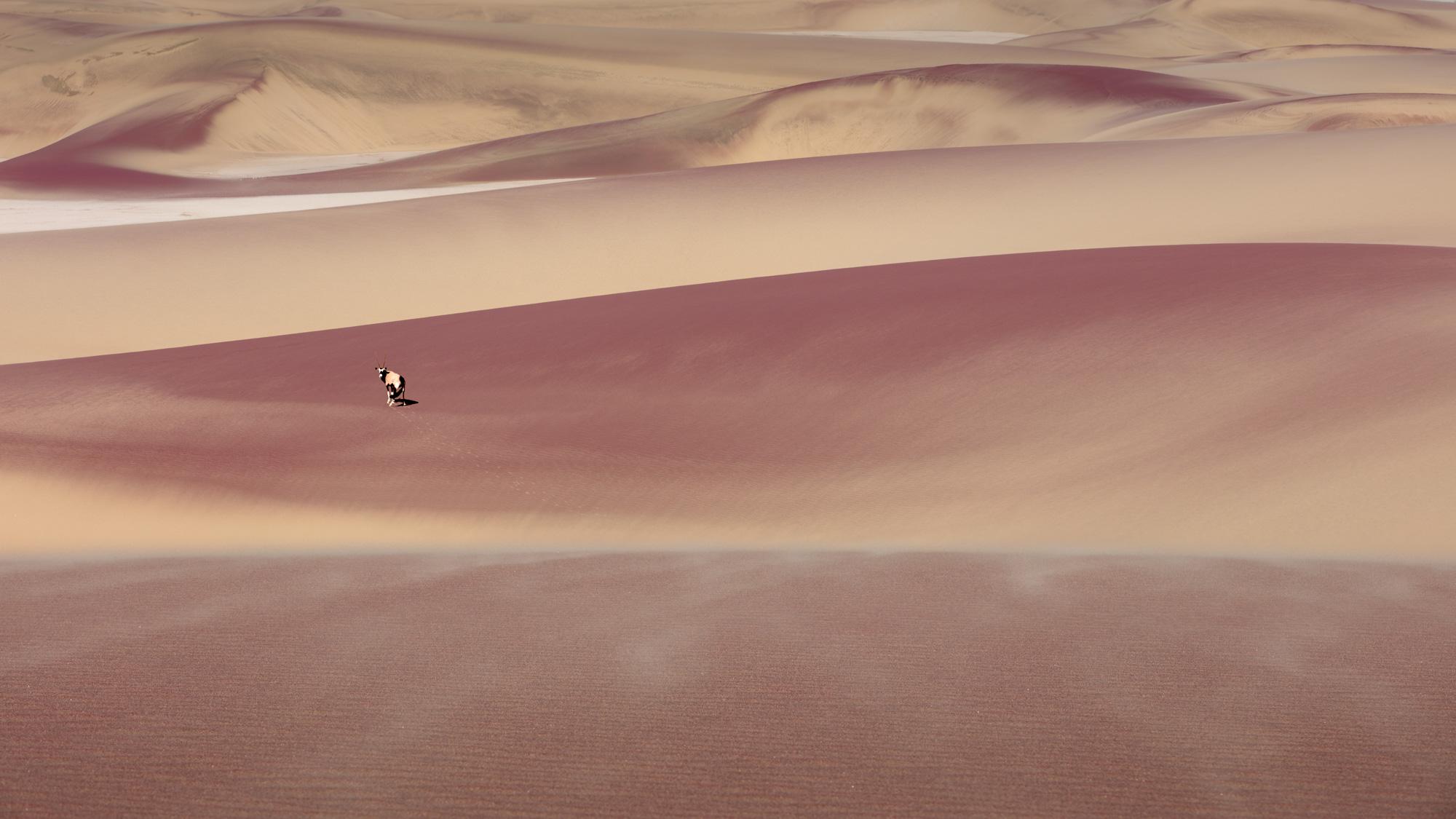 Oryx At Namib Desert