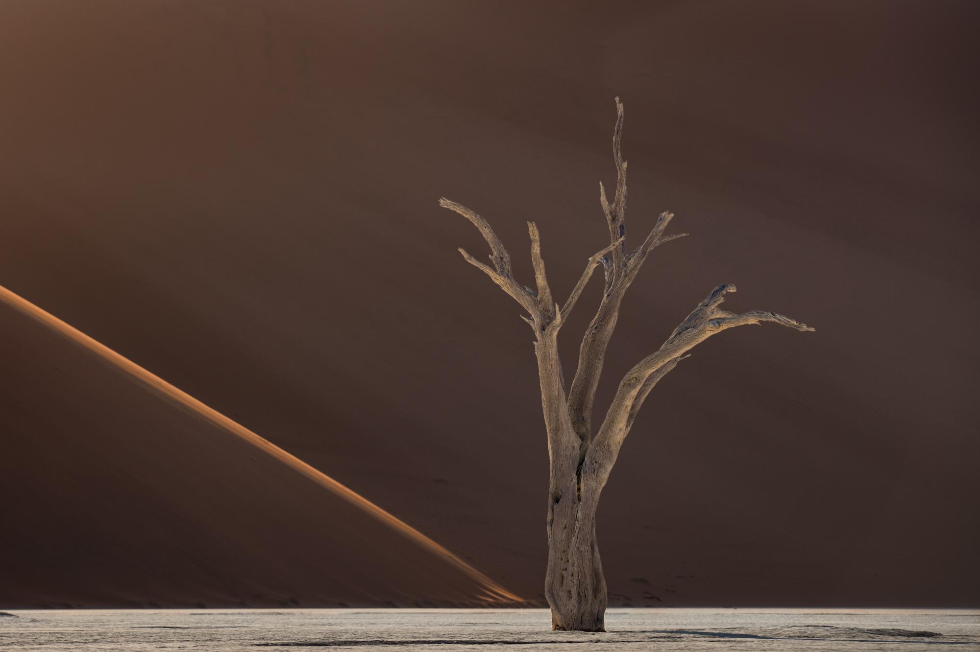 Dead Trees at Dead Vlei III