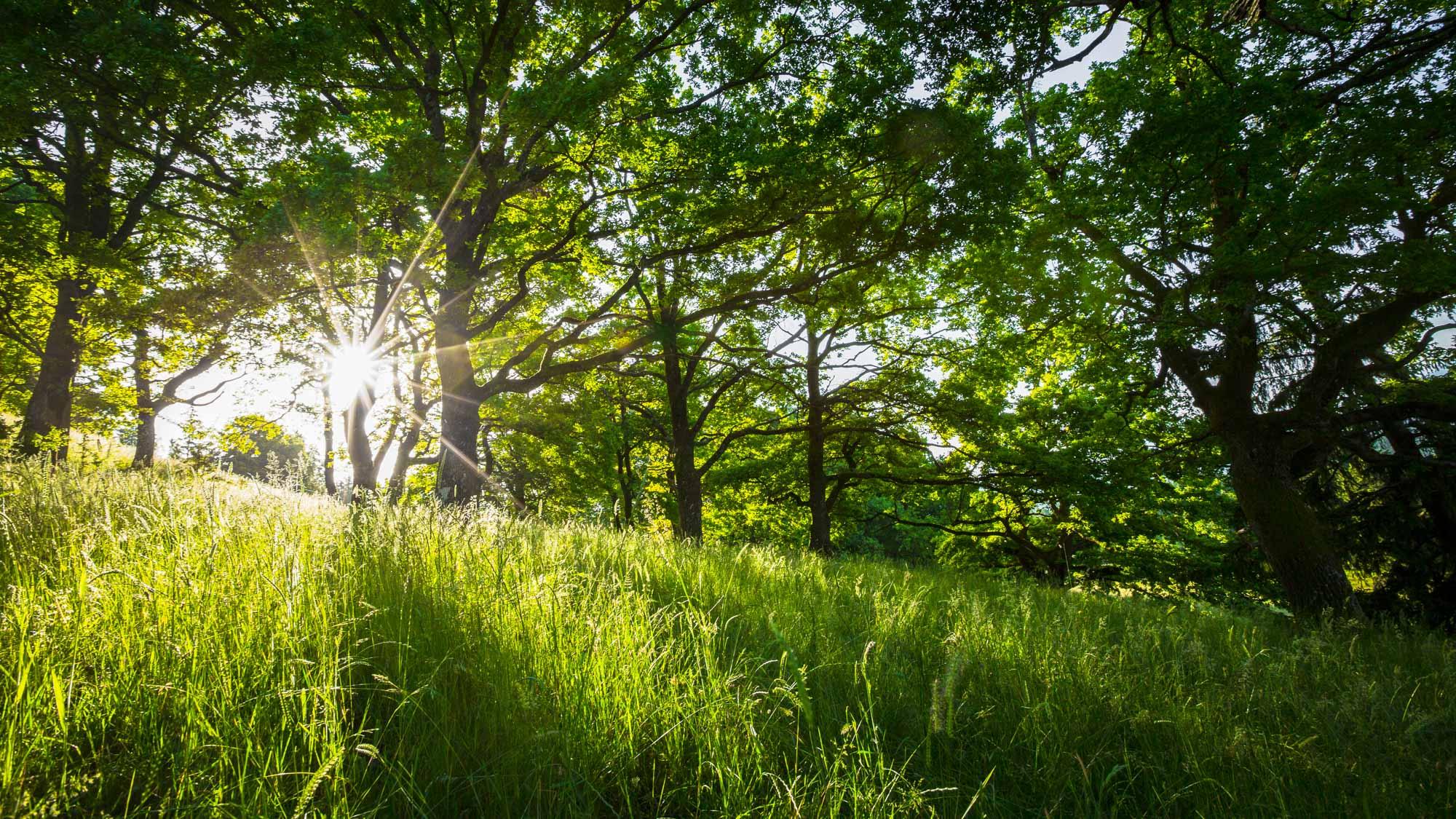 Forrest Morning I