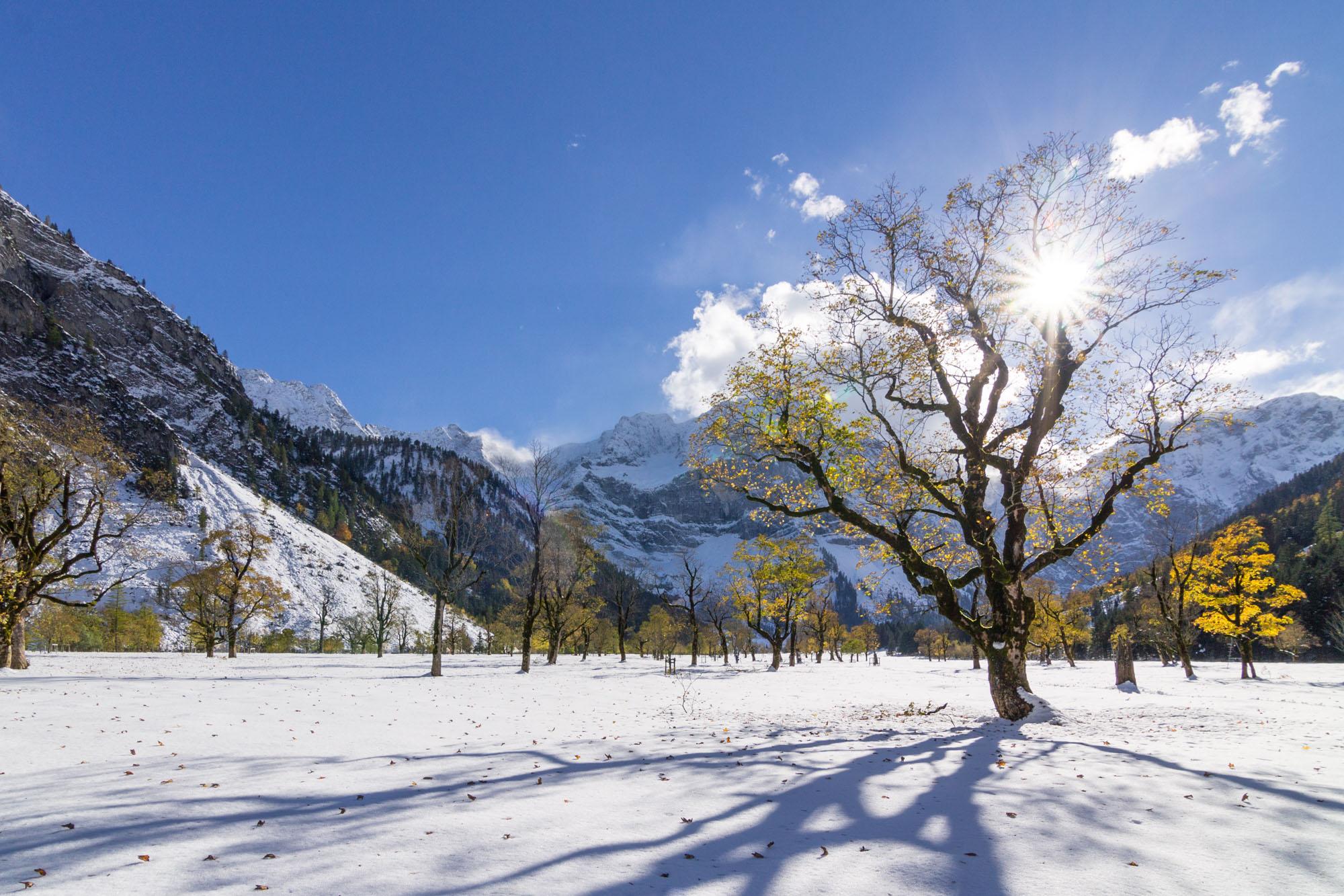 Winter Maple I