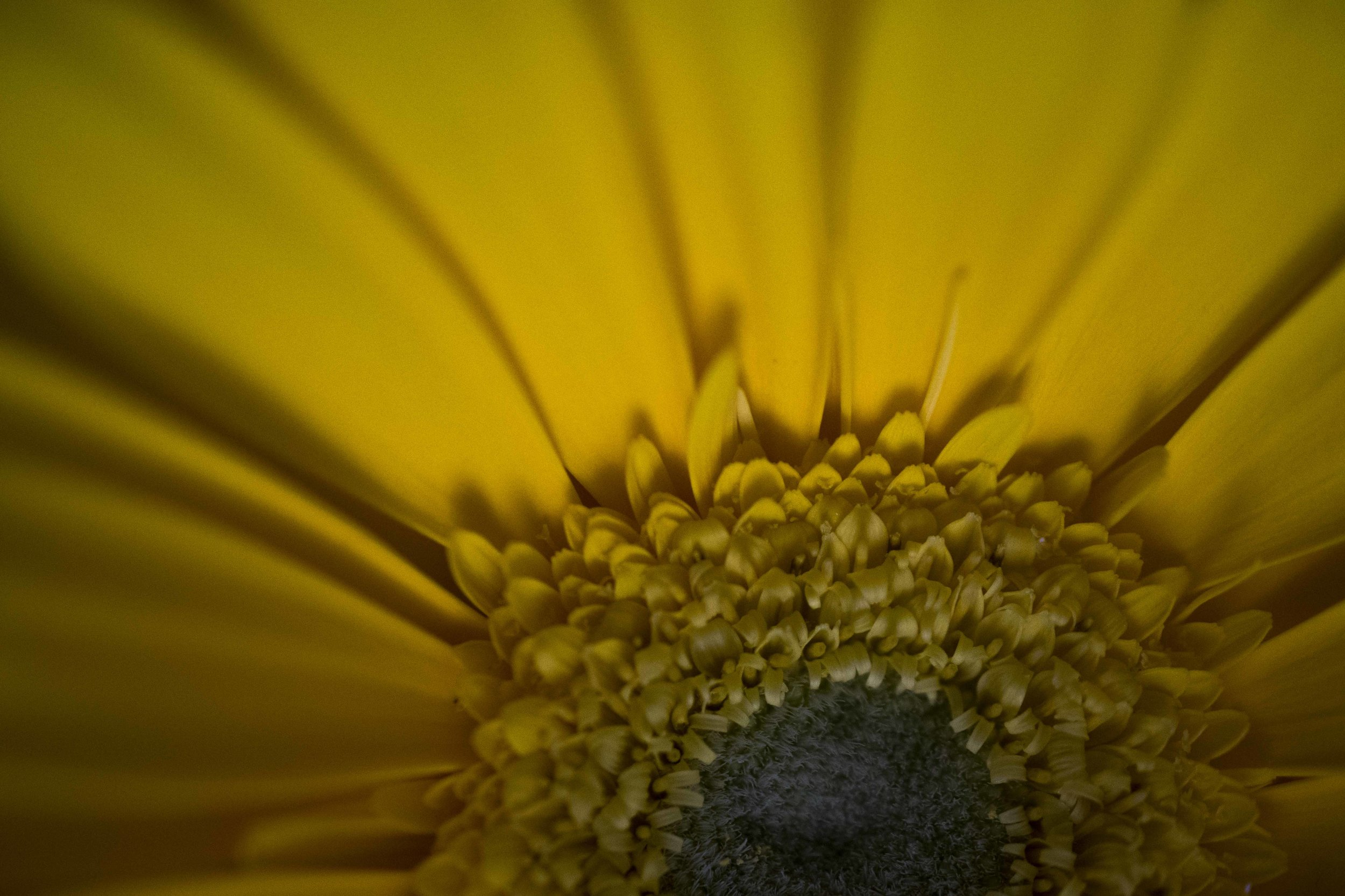 In honour of Mabel - In honour of Mabel, in Audreys faith story, we have a photo of her favourite flower.