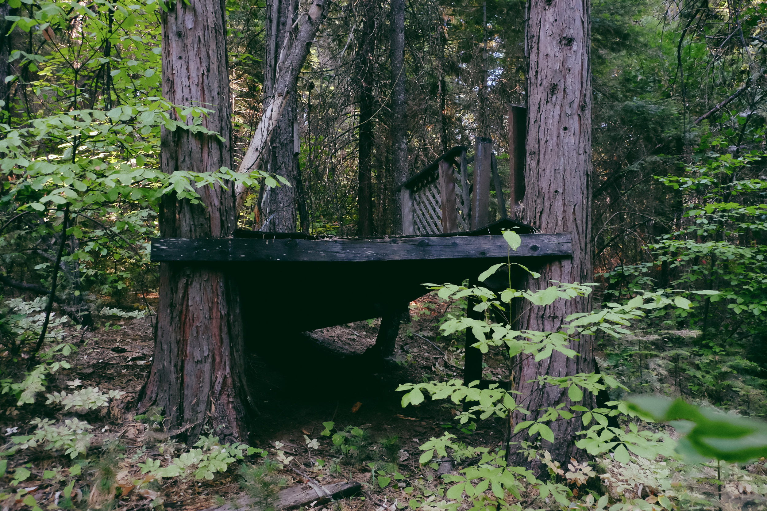 My Childhood tree house ^