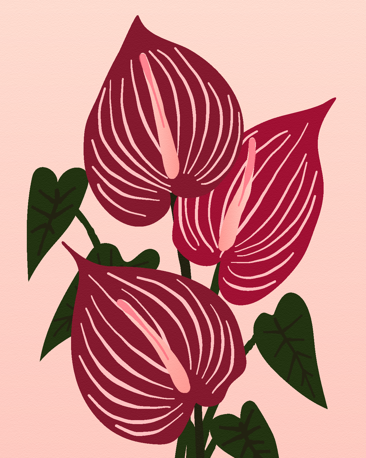 Anthurium-Safari.png