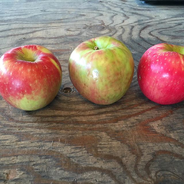 Guess which Honeycrisp is from the grocery store? Why do ours taste better? #treeripened #applelove #heirloomapples