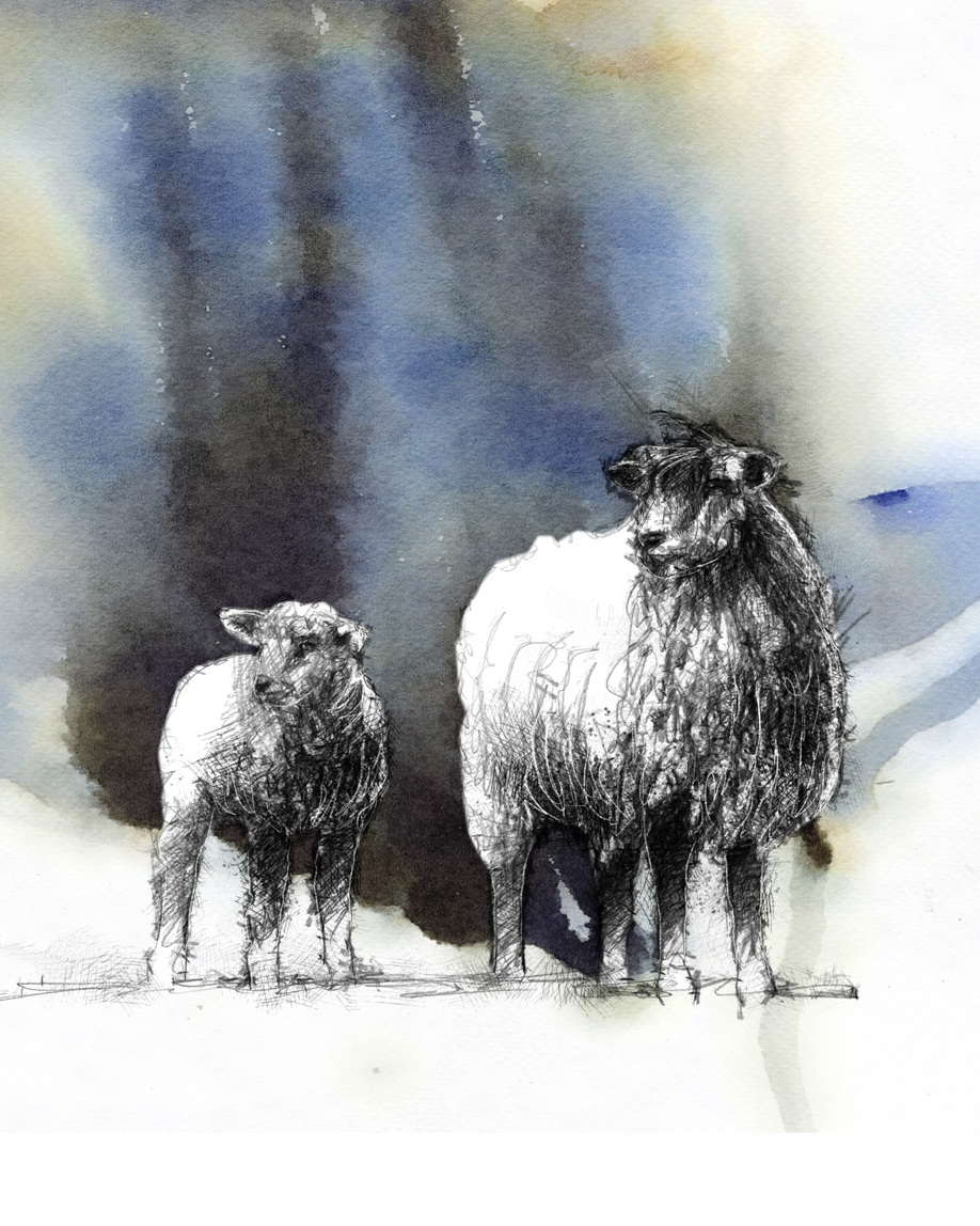 Sheep Giclée Print by Sean Briggs