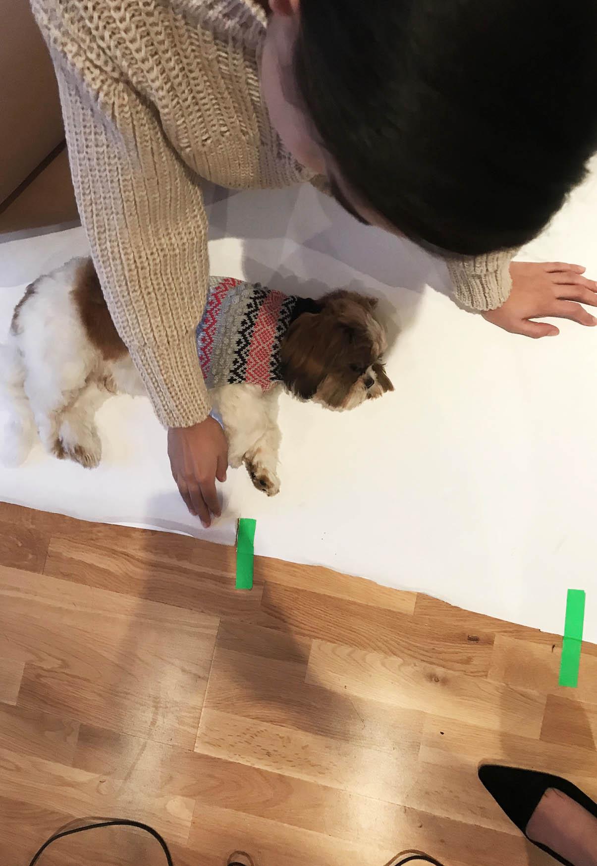 DOG JUMPER KNITWEAR MADE IN UK
