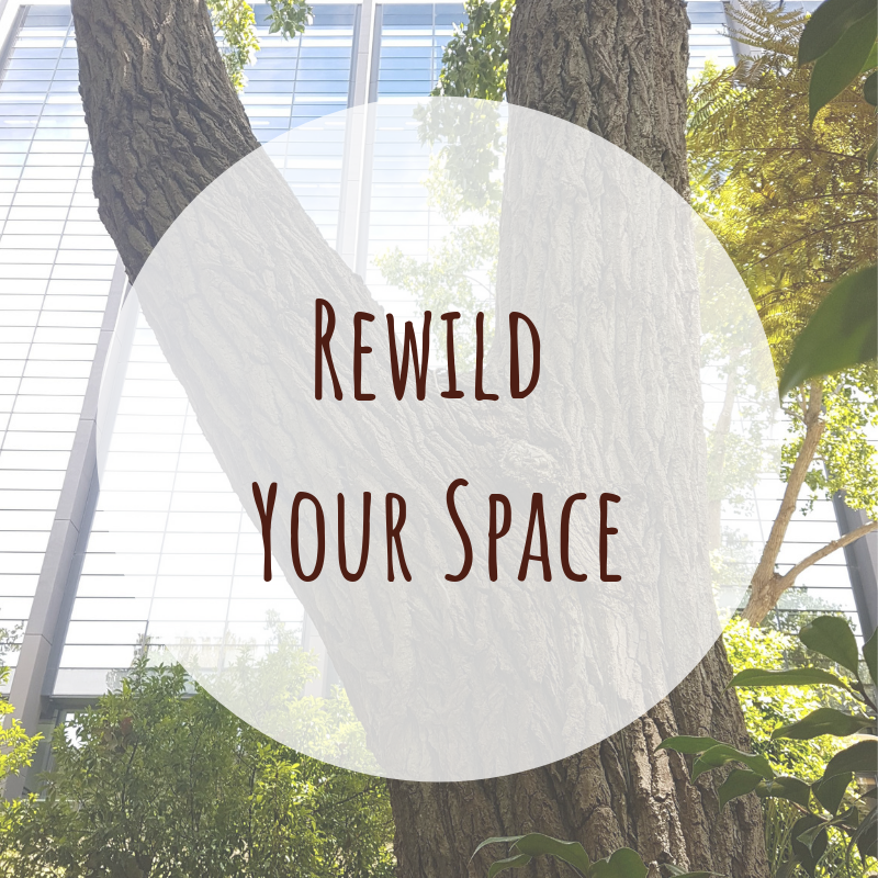 Rewild Your Space.png