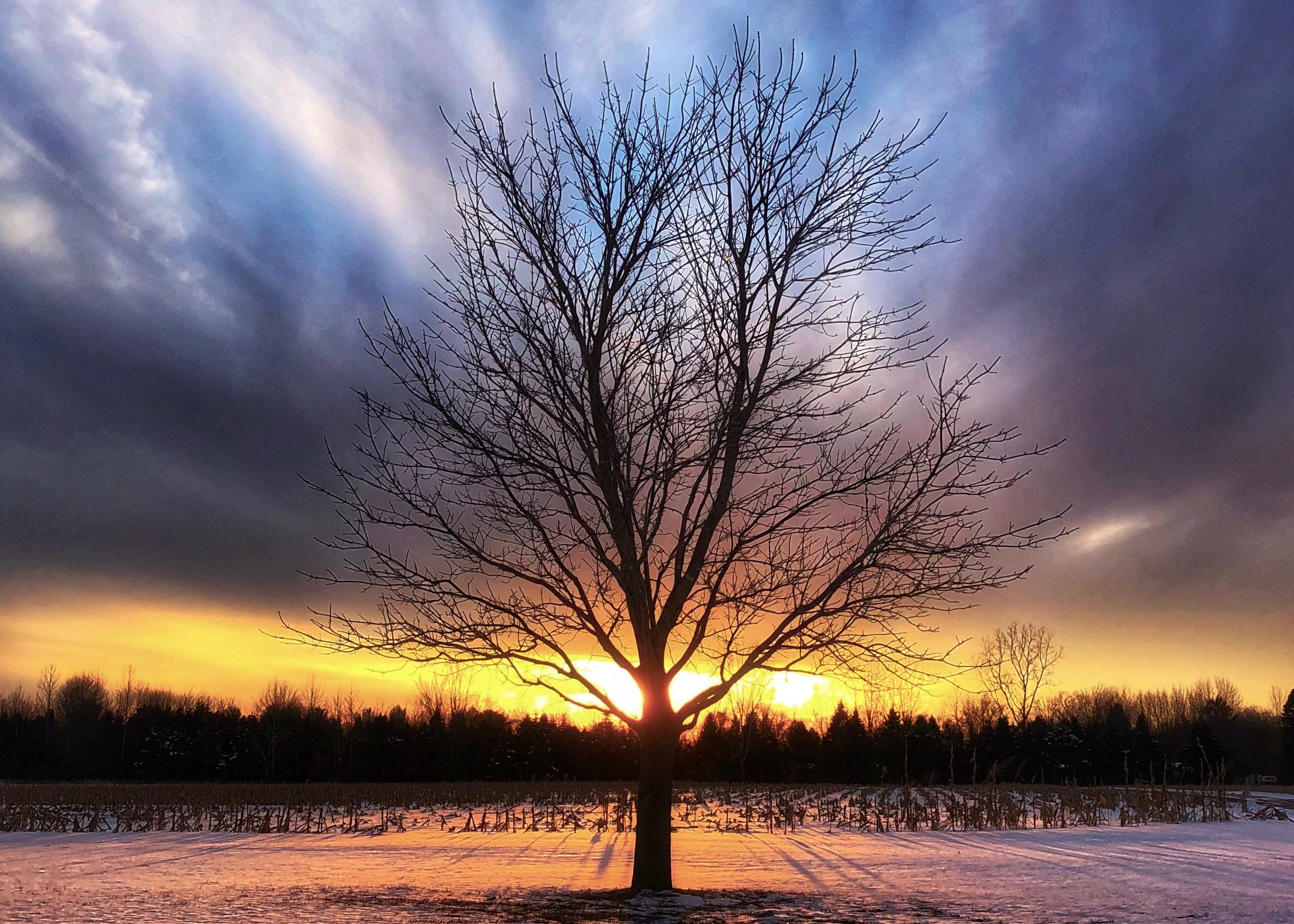 tree-sun-snow5x7.png