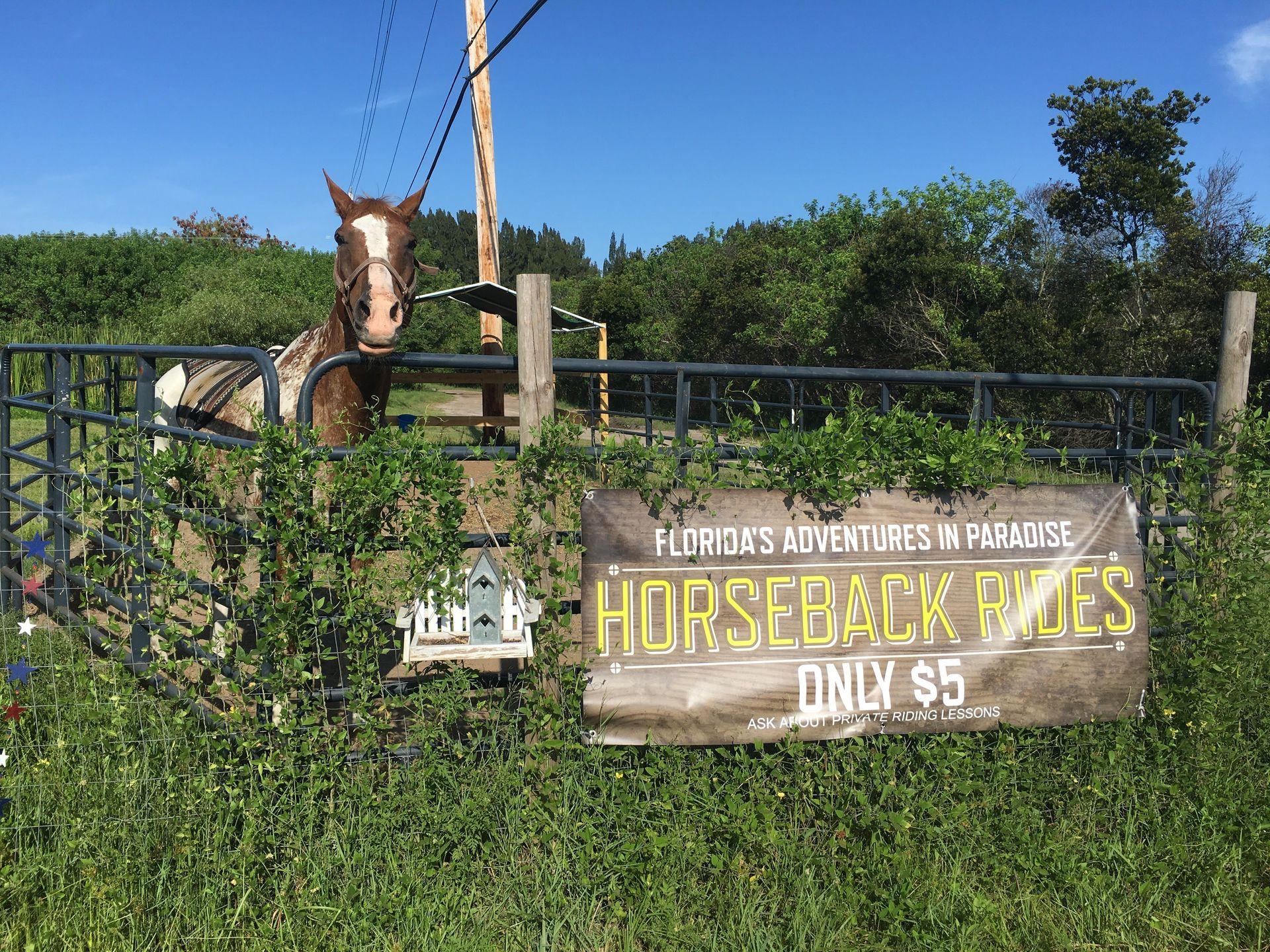 obloy_family_ranch_horseback_riding_florida.jpg