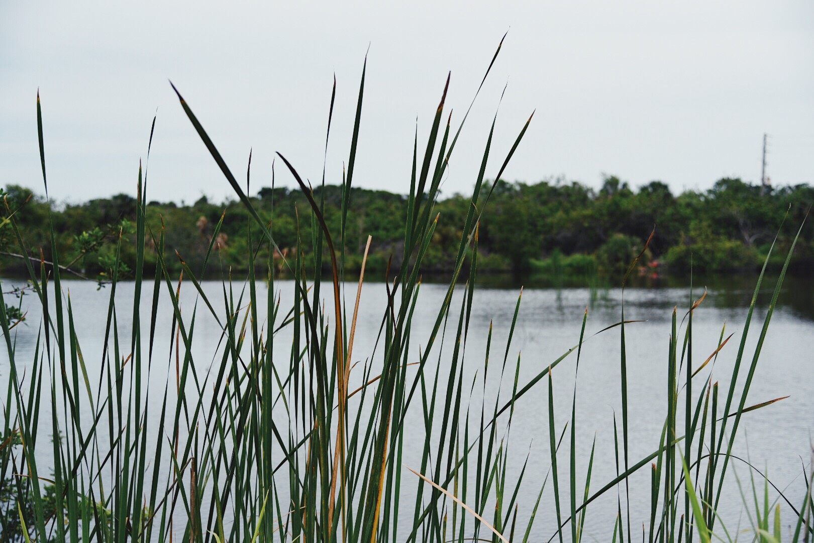 fishing-florida-stocked-ponds-obloy-family-ranch.jpg
