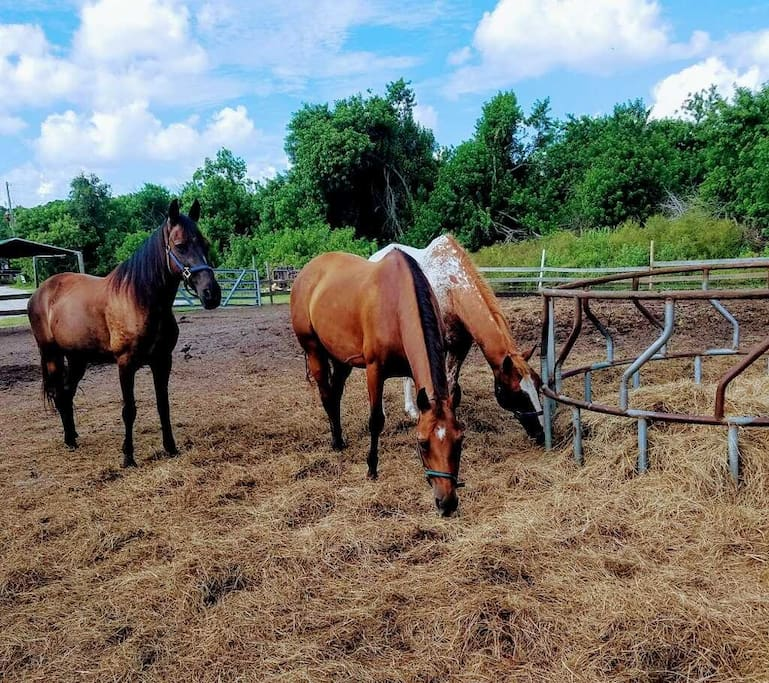 horse-pasture-obloy-family-ranch.jpg