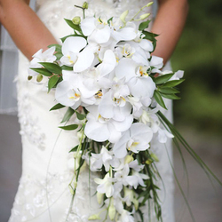 Classic White Orchid Wedding Bouquet $150