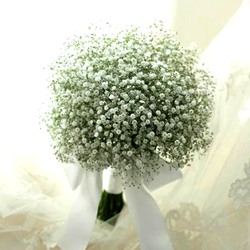 Pure Baby's Breath Bridal Bouquet $60