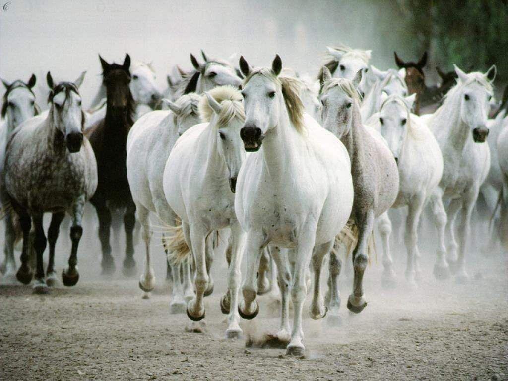 White Horse et al
