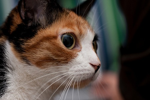 Cat's eyes are not only fascinating, they are also a window into their state of mind and mood.   ©  Supplied